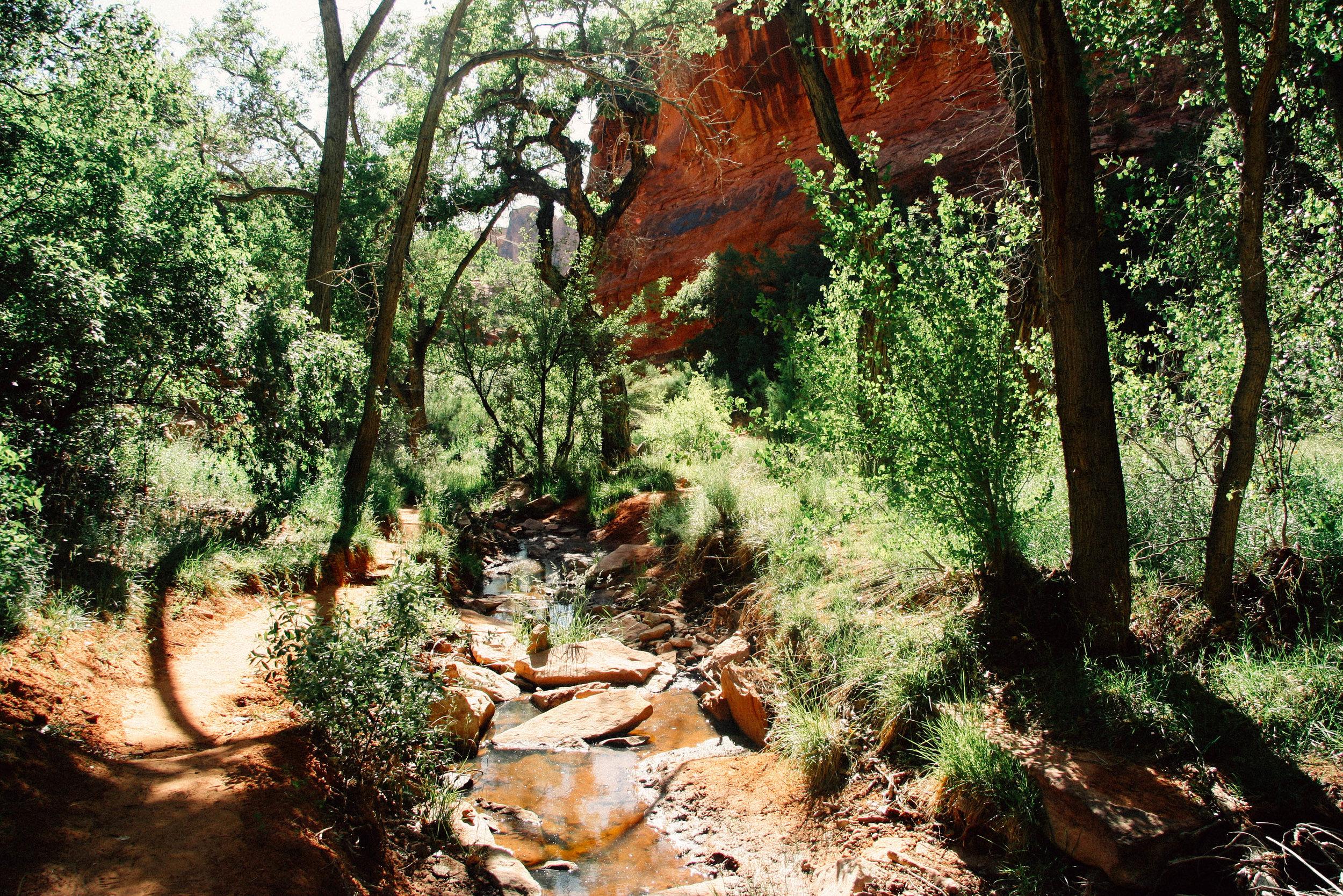 Cottonwood grove in the deep canyon riparian zones, near Moab, Utah.