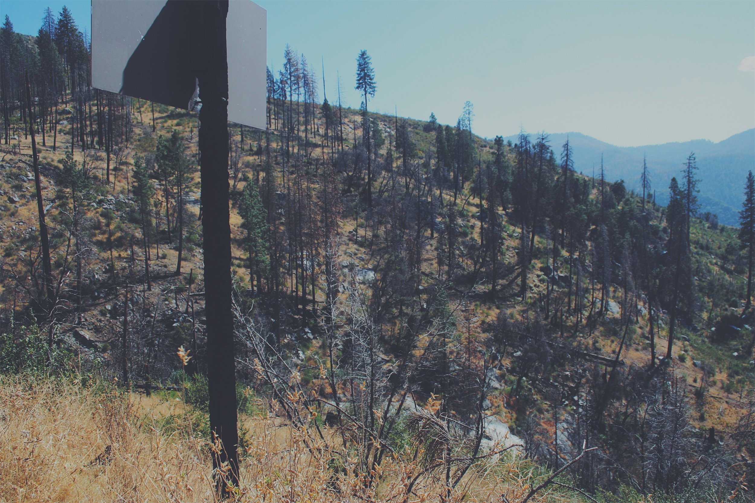 Post fire, Foresta, CA. Yosemite NP. Elder is growing back all around. The Ferguson Fire in August 2018 just burned this whole creek and hillside up again.
