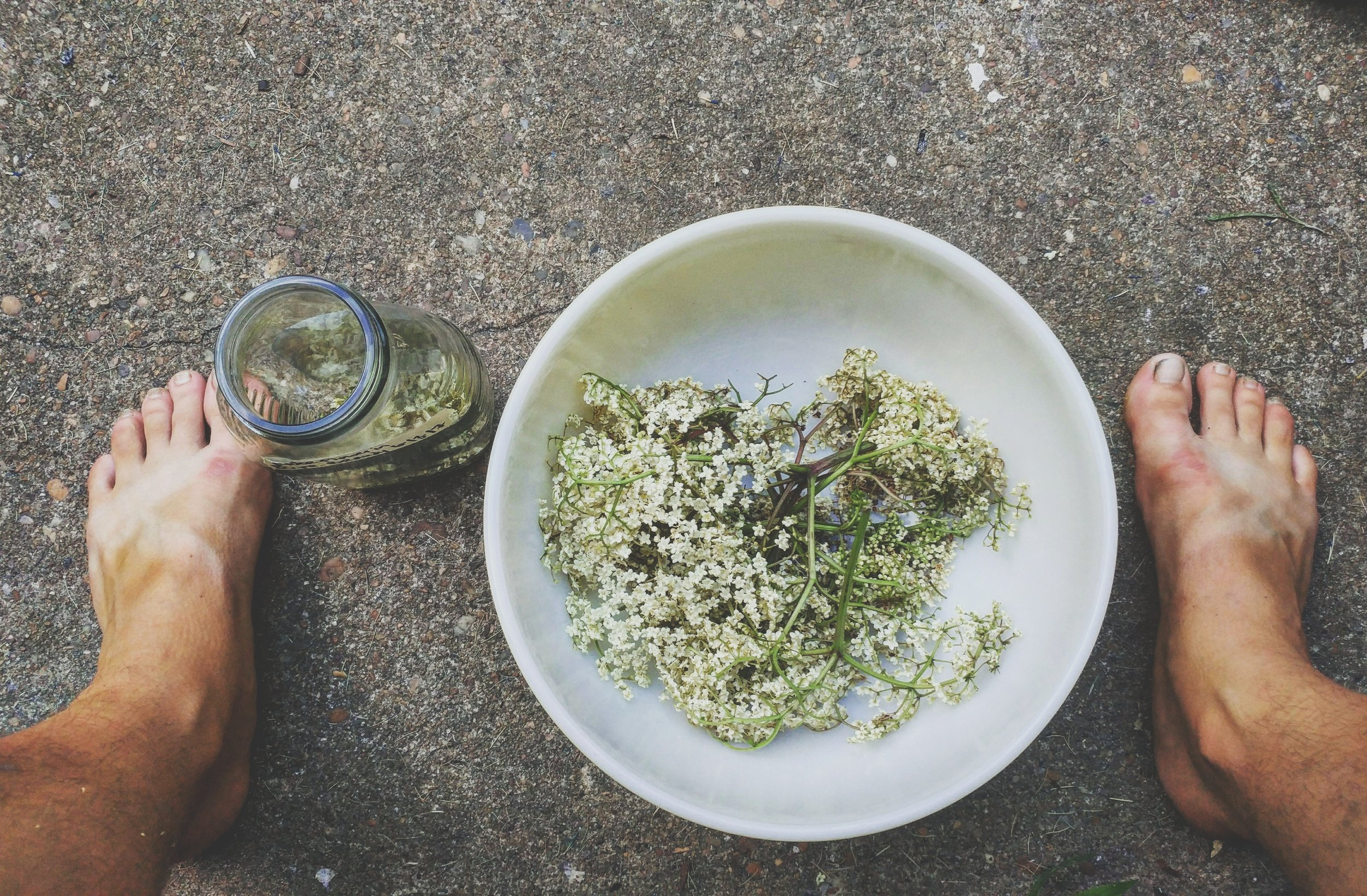 Elderberry flowers in Virginia. Photo credit: Allie Hawley of  Fiddlehead Farm and Apothecary .