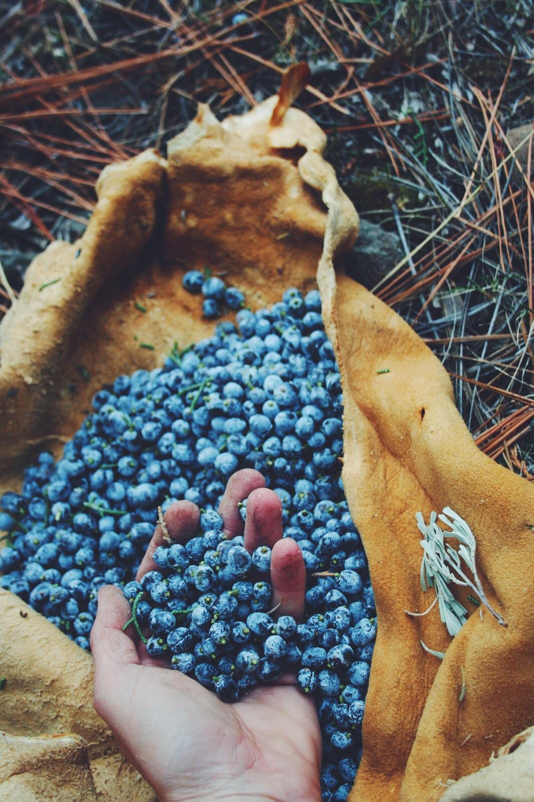 'berries' of Juniper. Near Sierraville, CA.