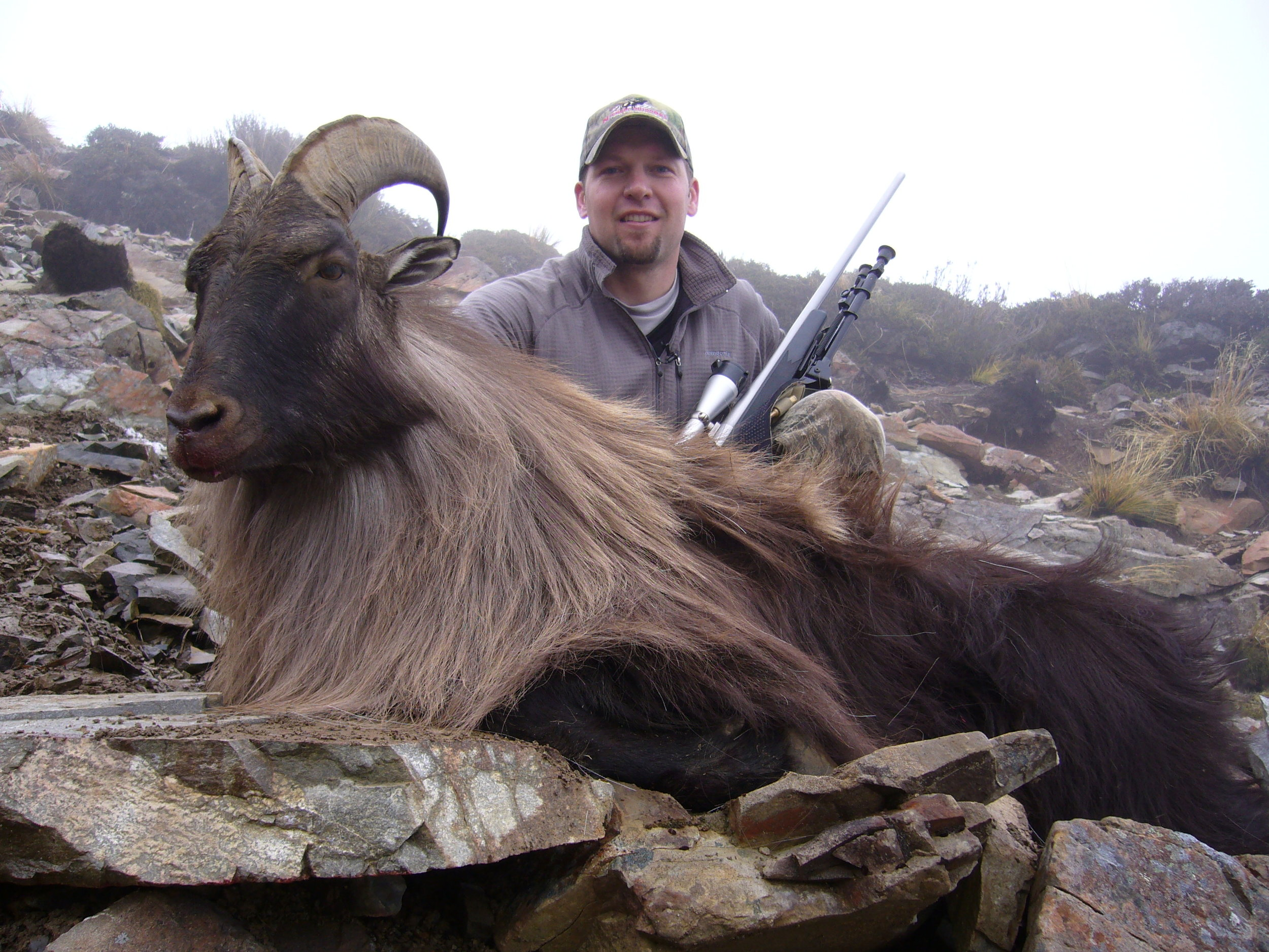 Hunting New Zealand Tahr