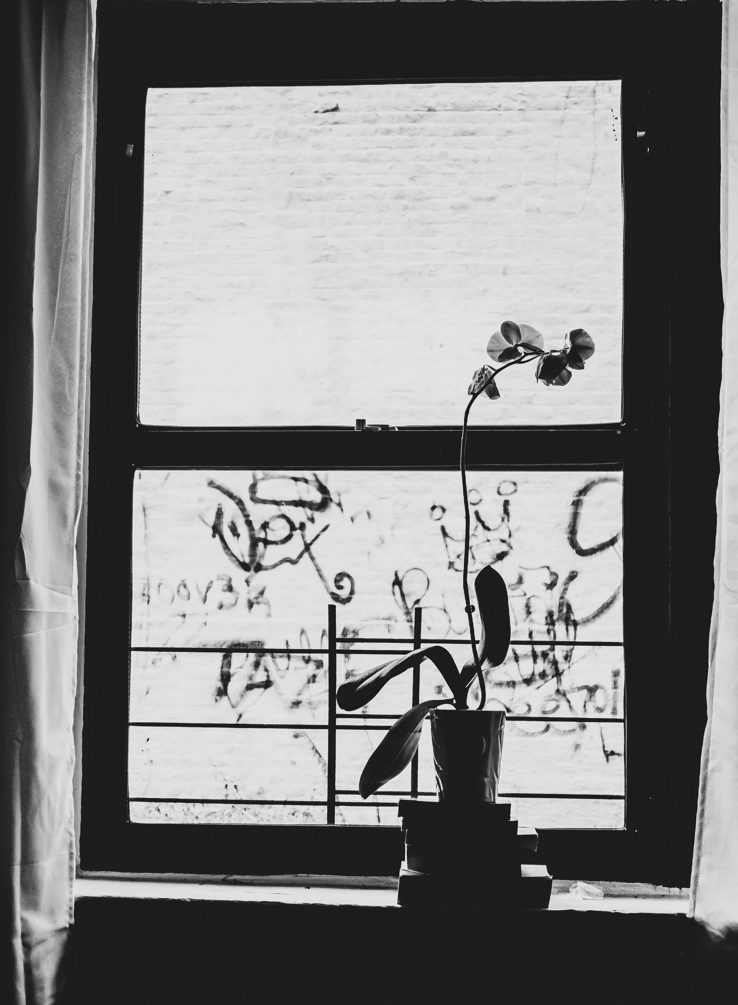 Day 20, Window -