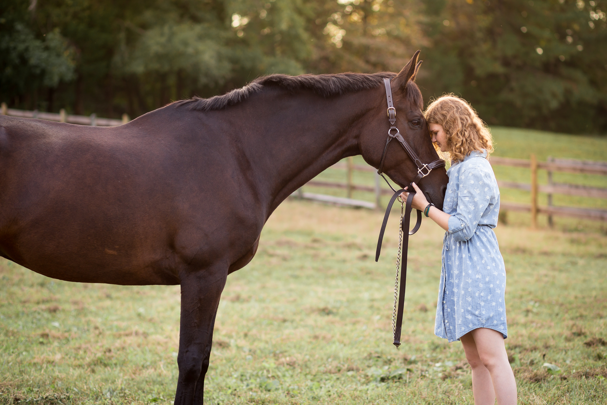 Virginia Equine Portrait Photographer
