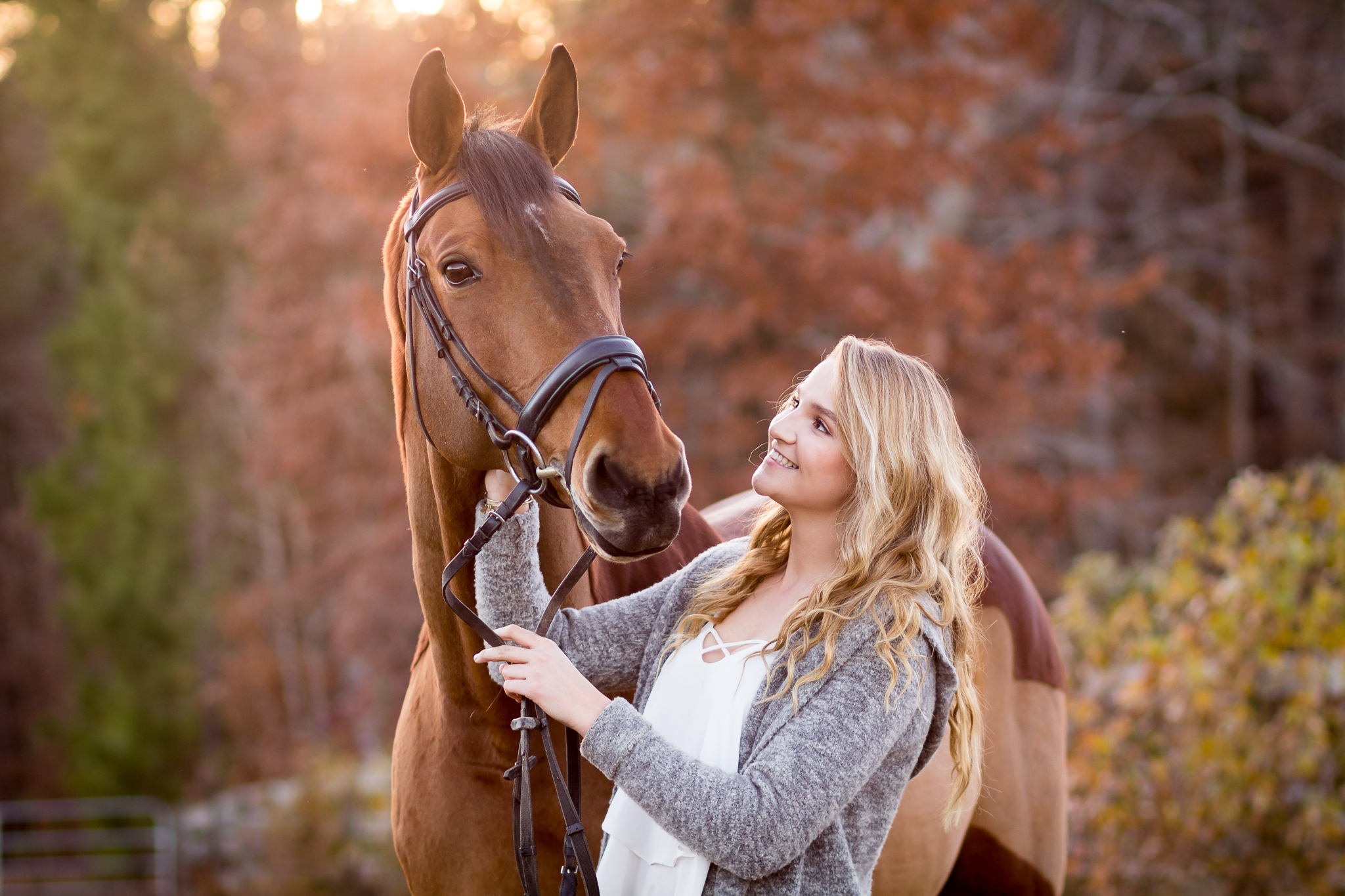 Virginia Equine Portrait Photography
