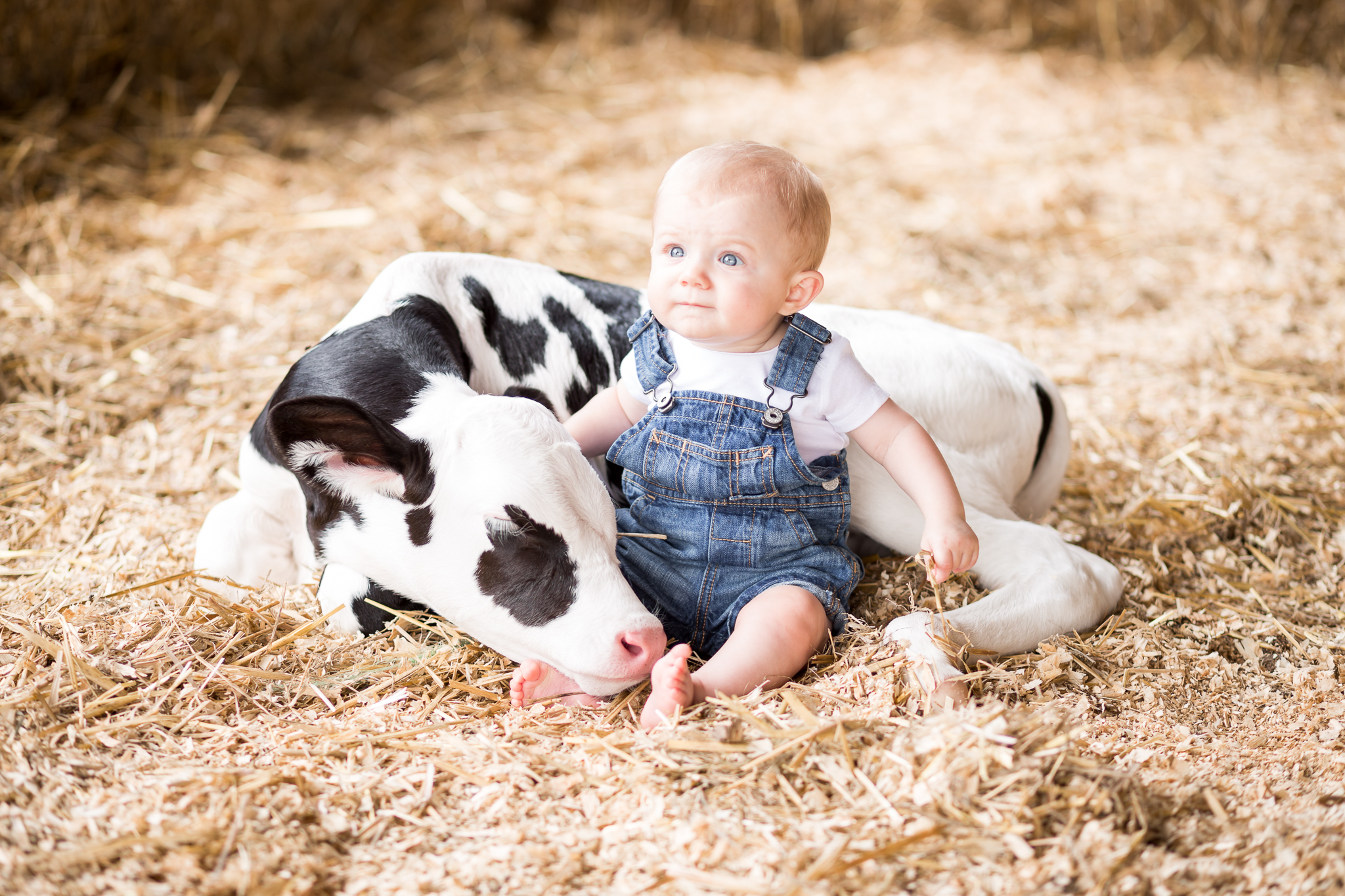 Virginia Portrait and Family Photographer - Dairy Farm Calf Session