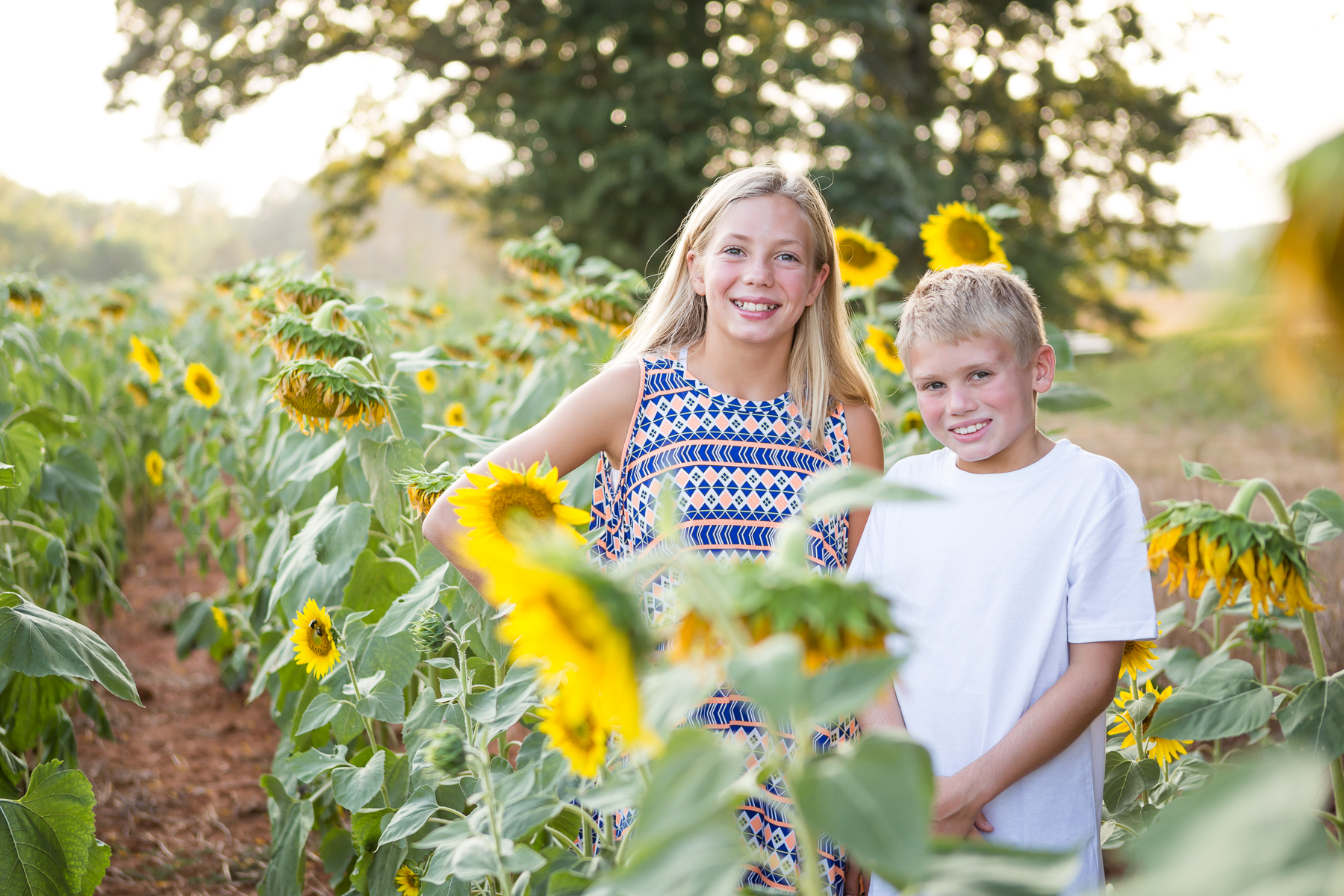 Richmond Virginia Sunflower Portrait Session