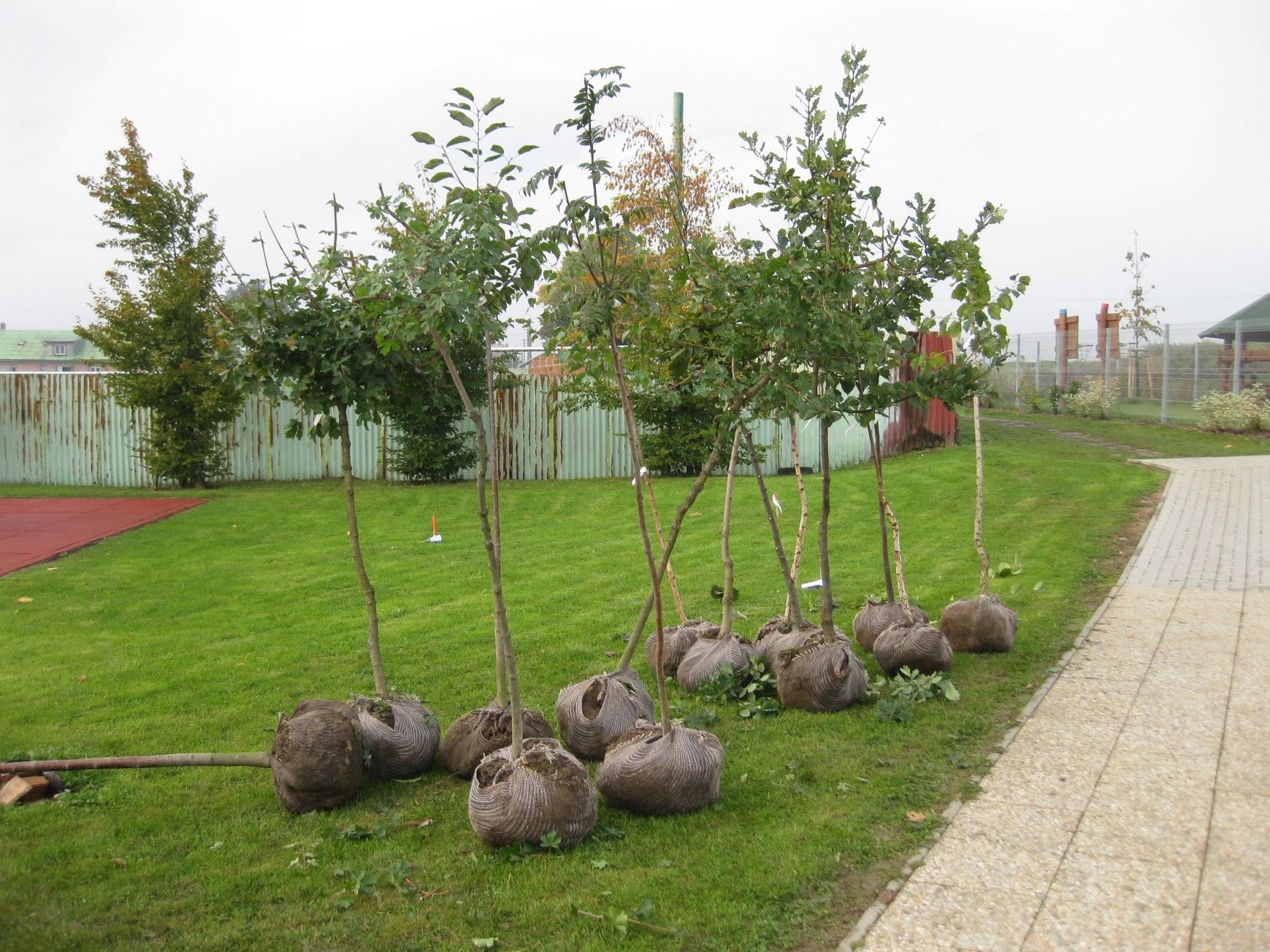 16 stromů připravených k výsadbě