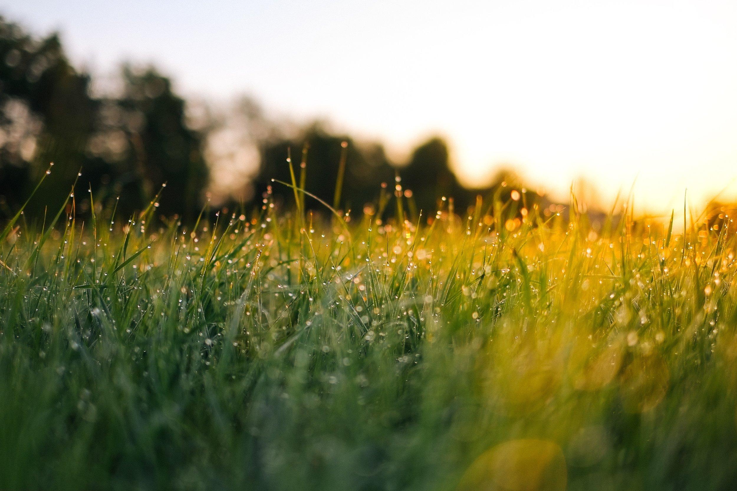 Zahrada je místo,   kde se projdu vlahou travou.