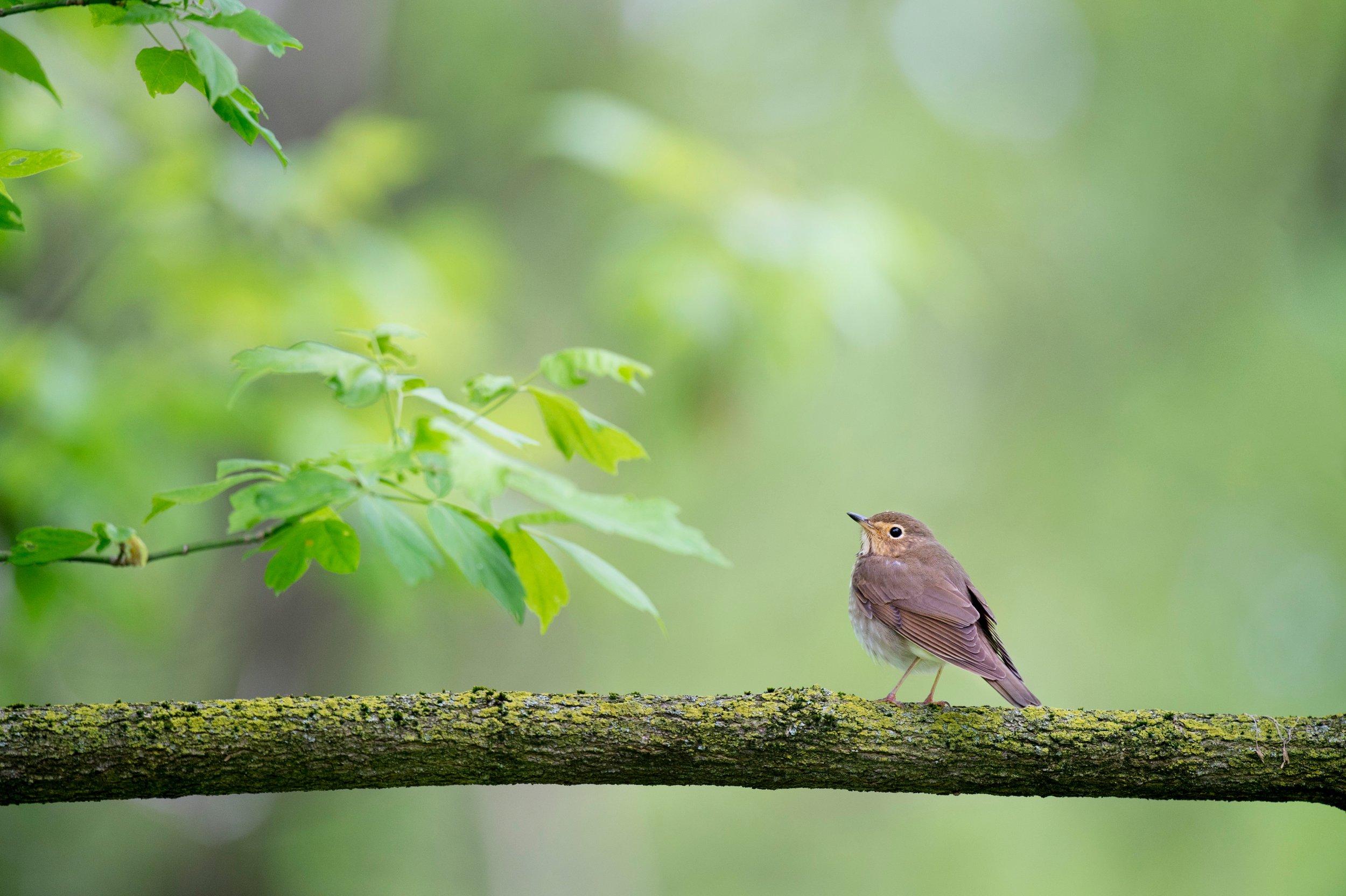 Zahrada je místo,   kde naslouchám zpěvu ptáků.