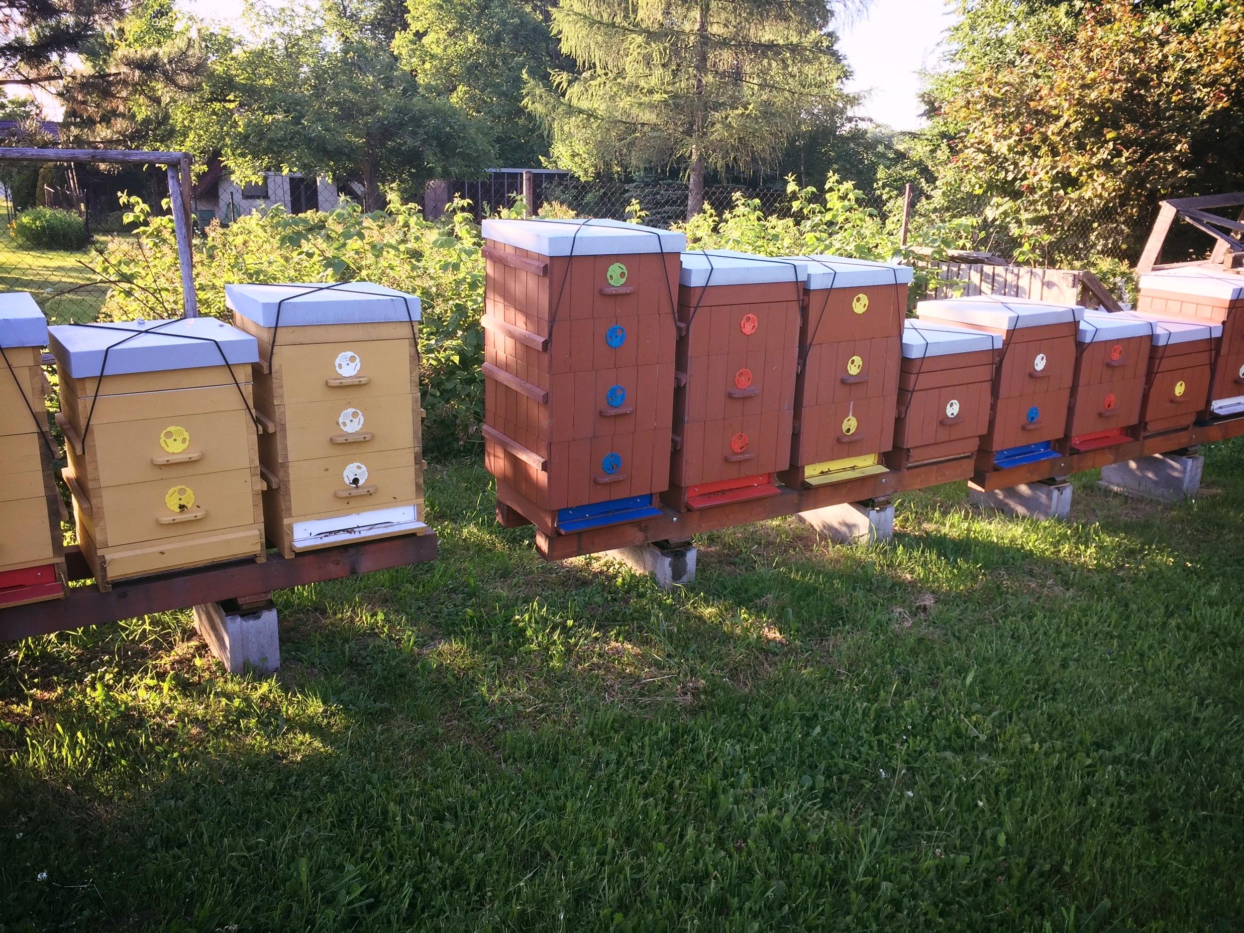 vítání léta v Trojanovicích, ktgardens, zahrada, úly, včely