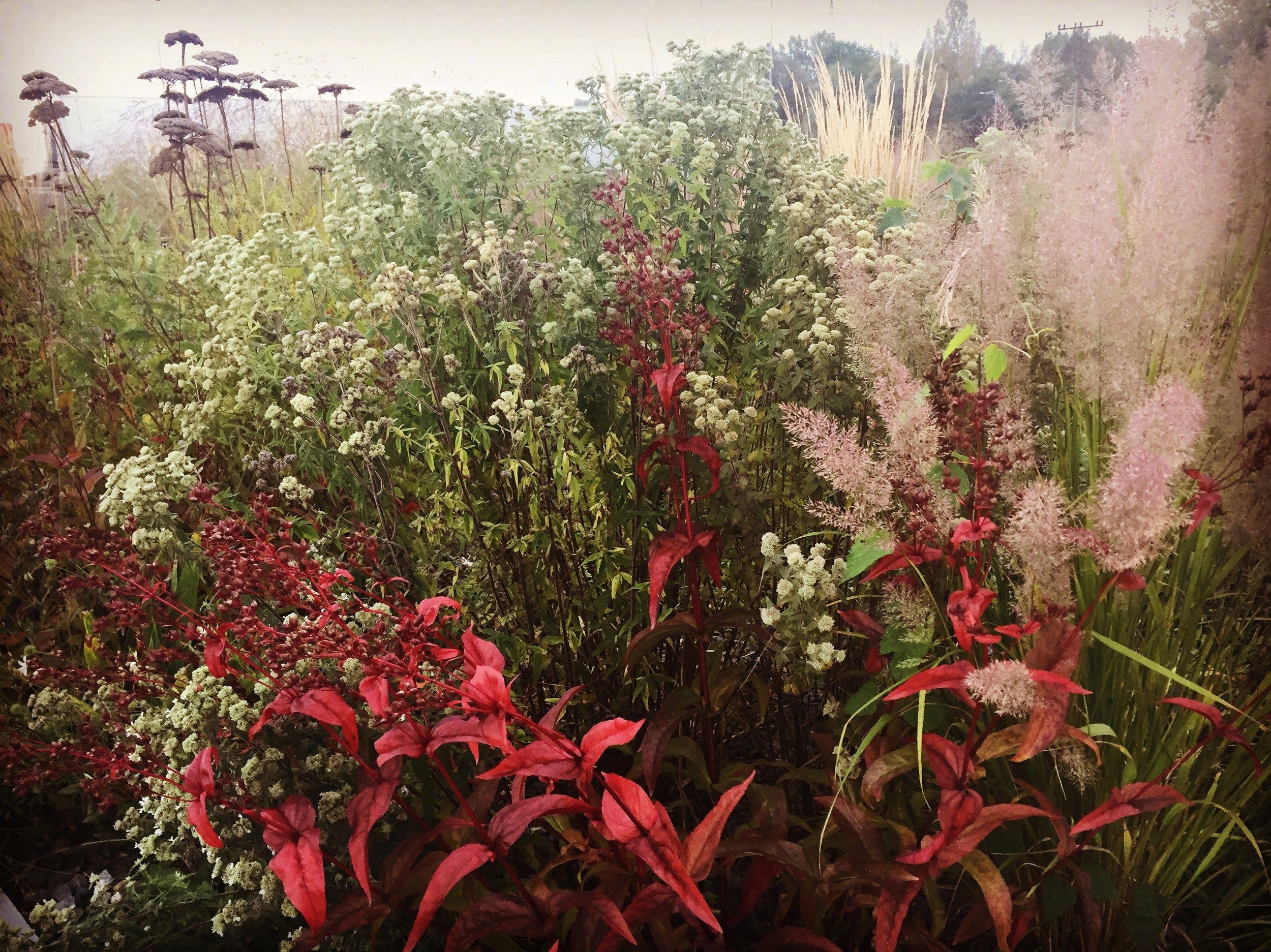 trvalkový záhon, traviny, ktgardens, zahrada, návrh zahrady, trvalky