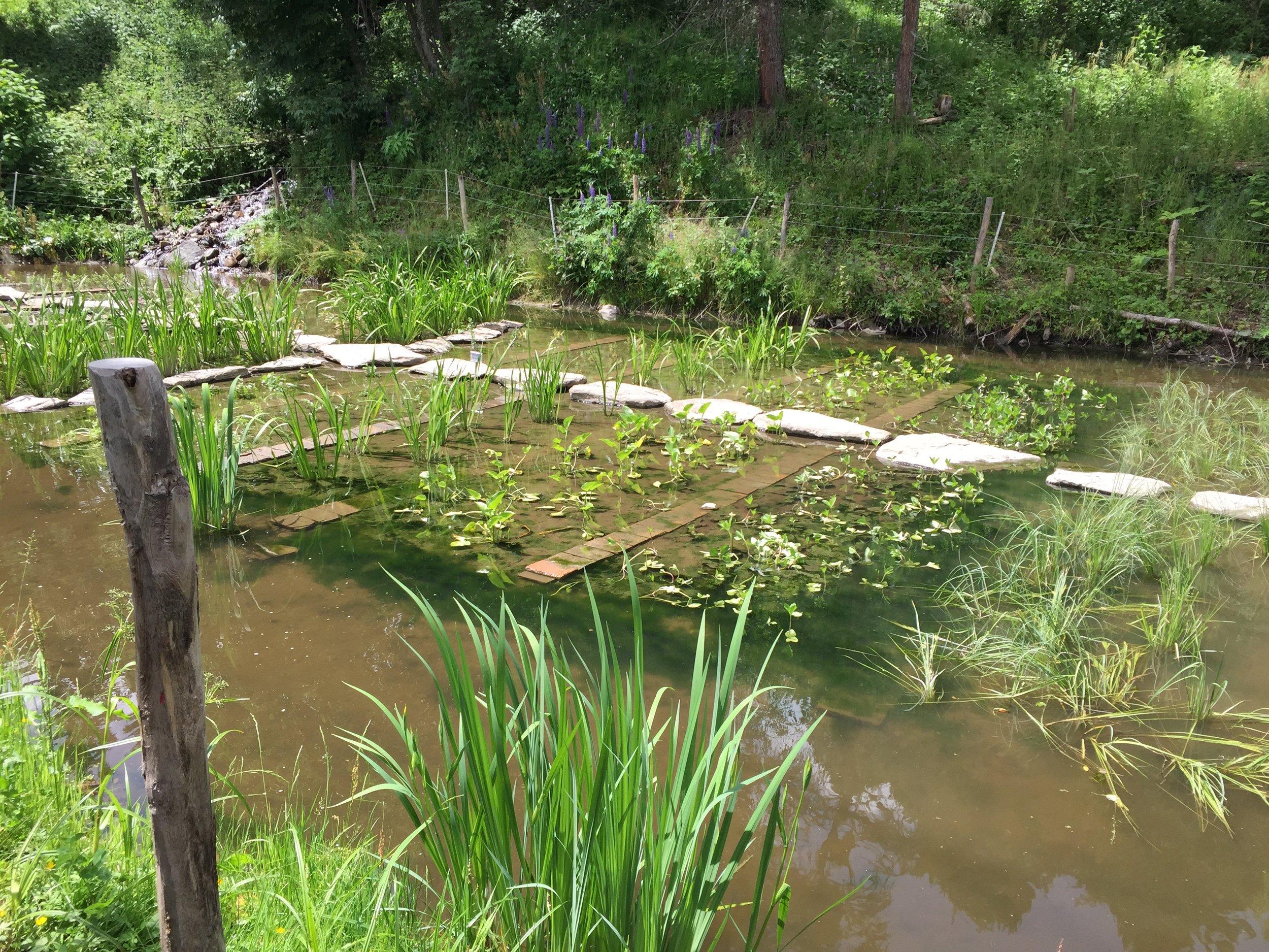 v mělkém rybníku pro chov raků se pěstují vodní bylinky, které prodávají do vyhlášených restaurací