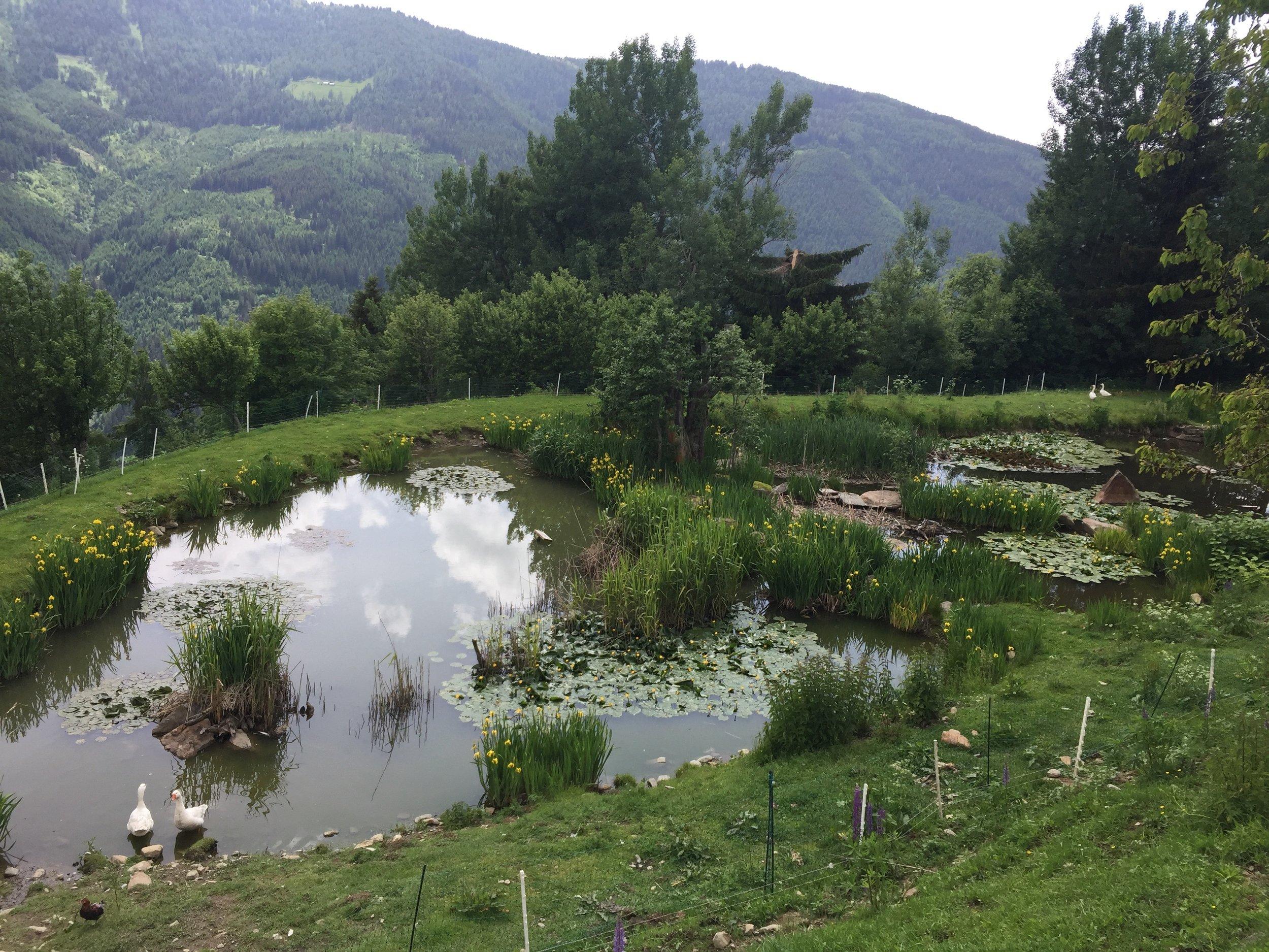 rybník pro chov drůbeže