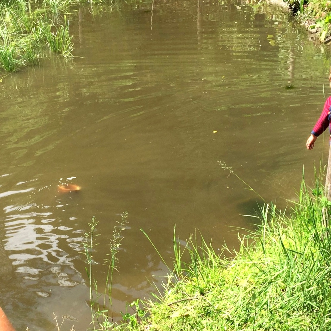 přepouštění vody do nižšího rybníku pomocí trubky