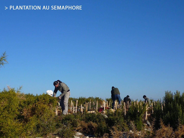 Plantation-copy.jpg