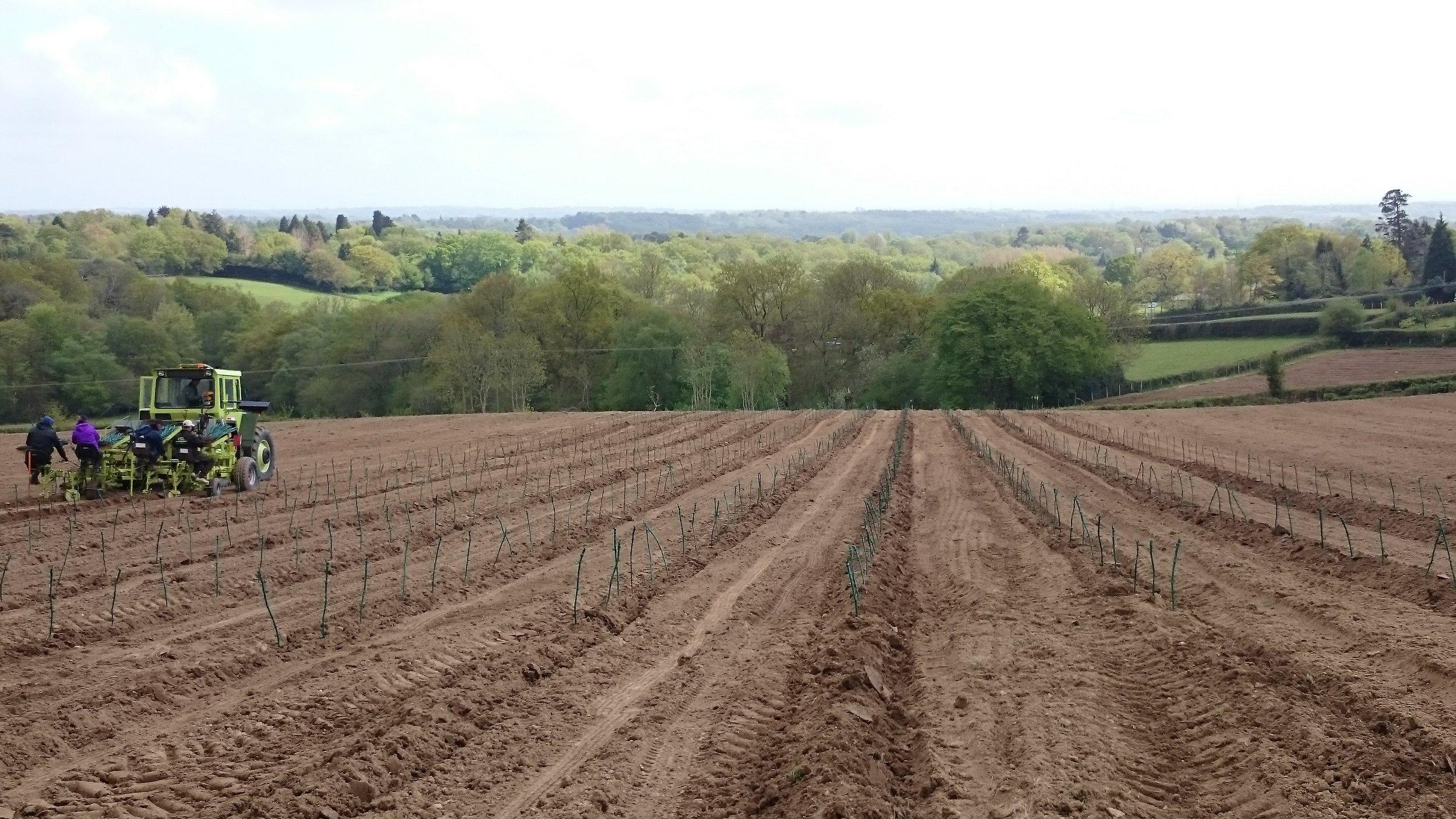 May 2015 - Planting