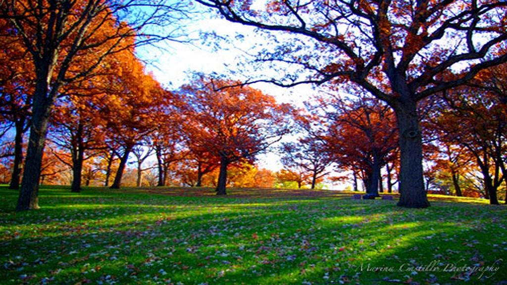 cherokee park.jpg