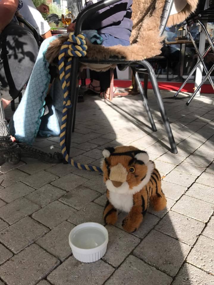 Hos oss är Alla välkomna även tigrar...