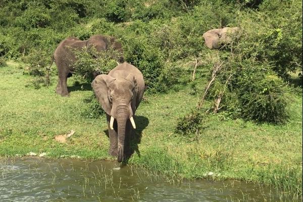 Kyaninga Lodge, Safari, Uganda