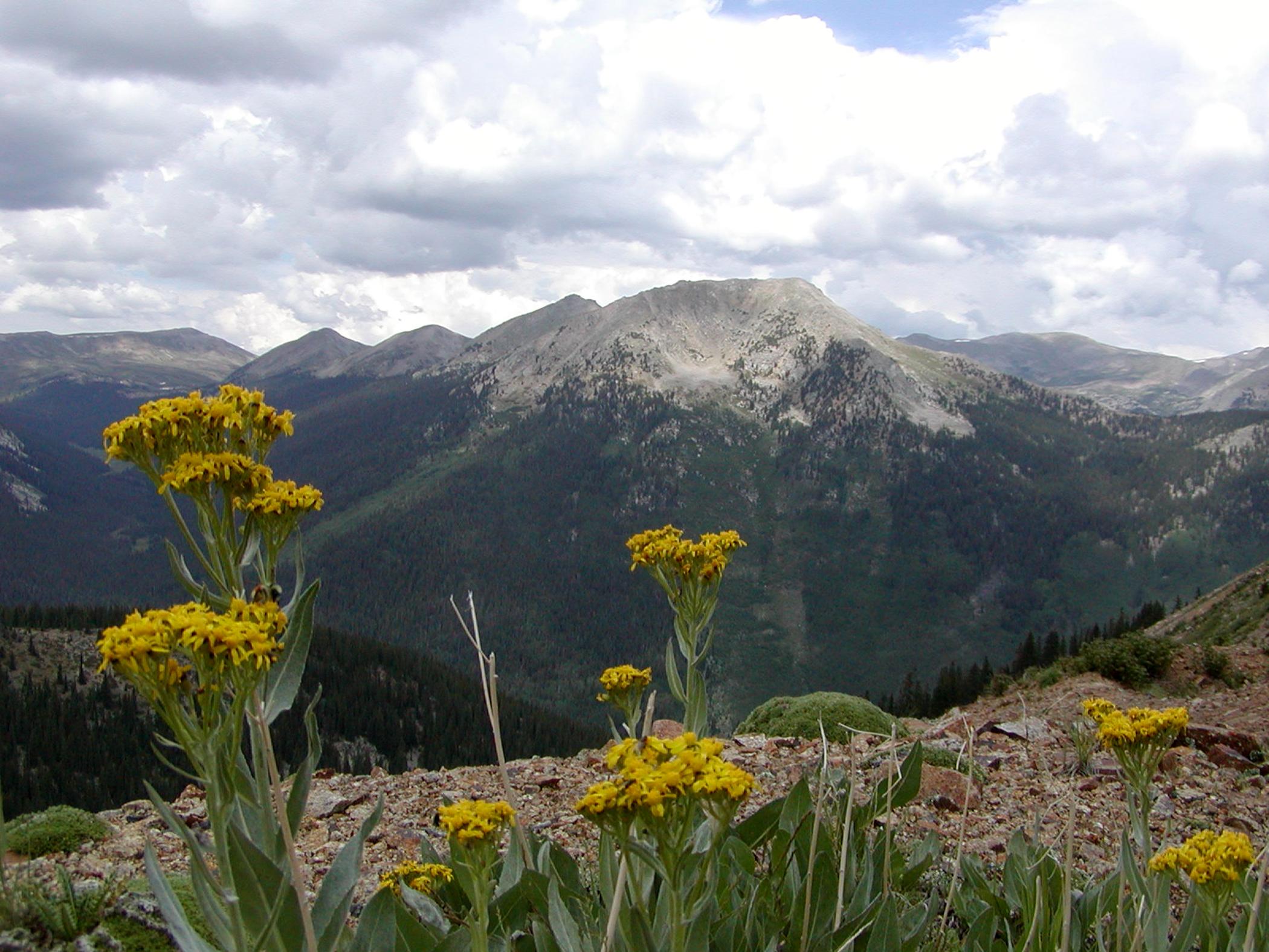 Tincup Mtn View.jpg