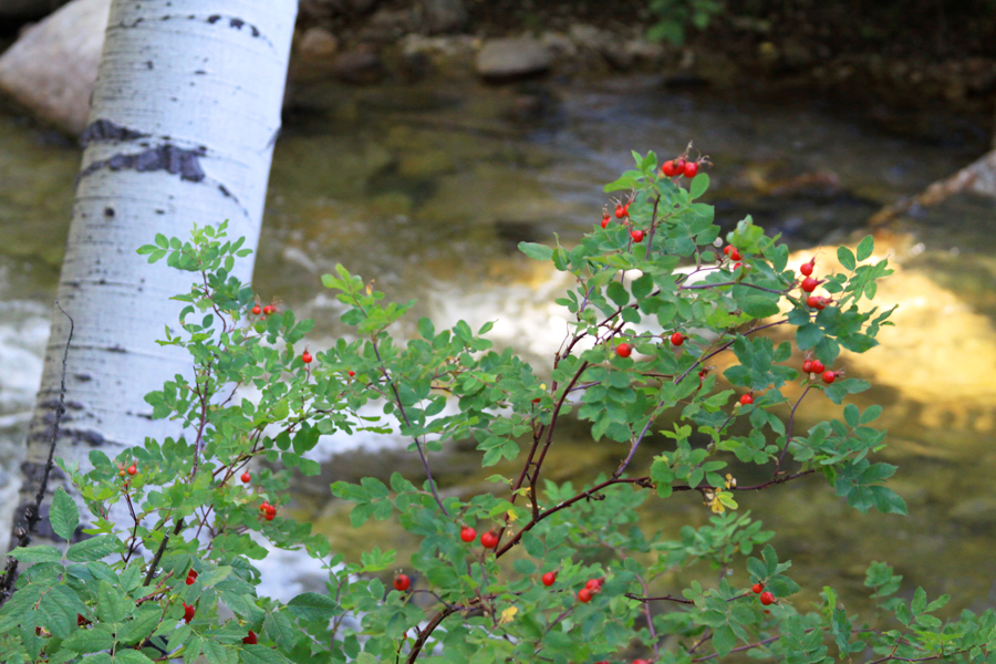 Stream-Berries.jpg