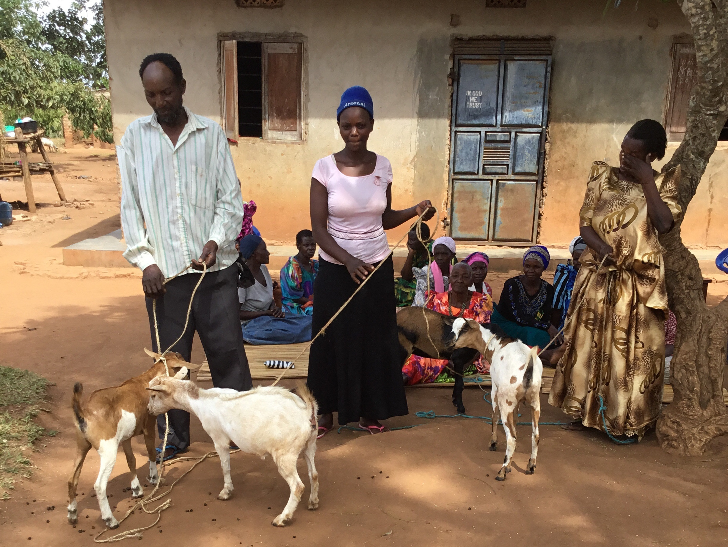 Kibo gave goats to each of the 39 members of Nabikenge village's Kyebajakobona Mvule Group. Like mvule trees, goats provide resources to the community and can be sold for a profit.
