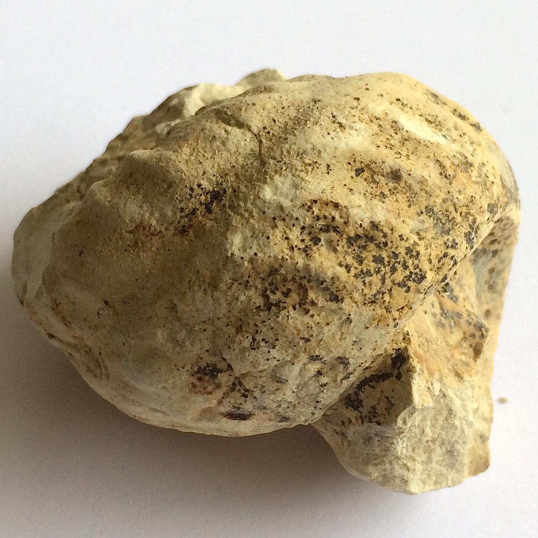 Mariella worthensis #646e  Grayson Marl Formation  Denton Co., TX