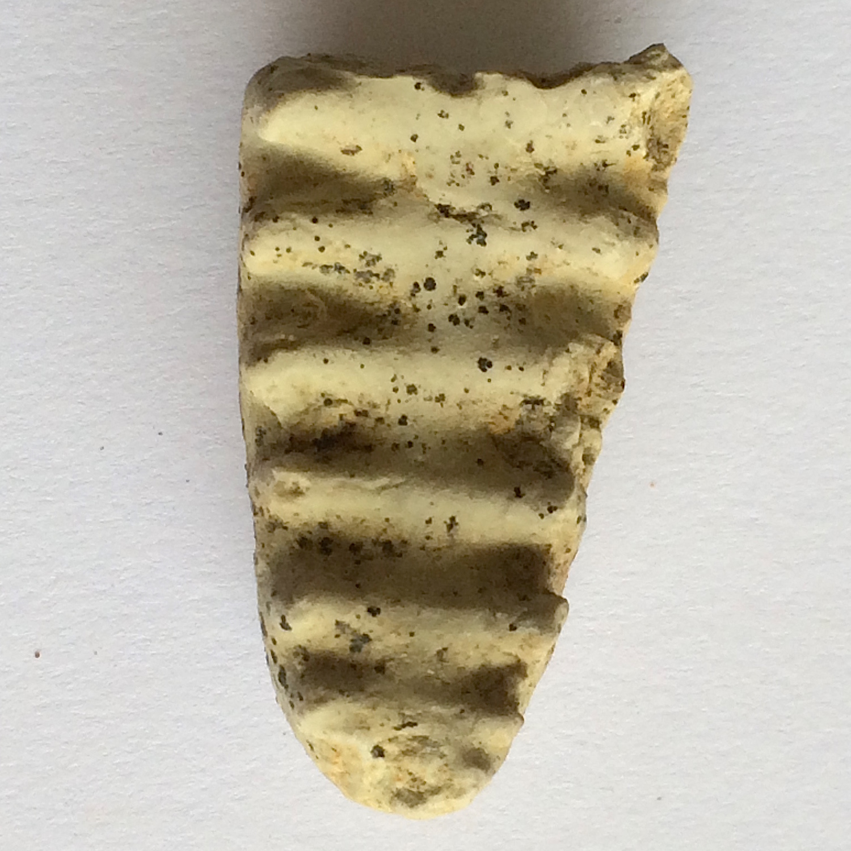 Metengonoceras #654b  Grayson Marl Formation  Denton Co., TX