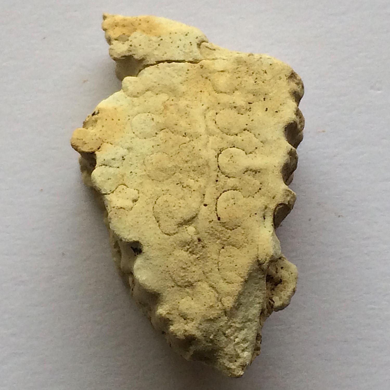 Metengonoceras #654c  Grayson Marl Formation  Denton Co., TX