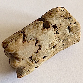 Baculite #225  Ozan Formation  Ladonia, TX