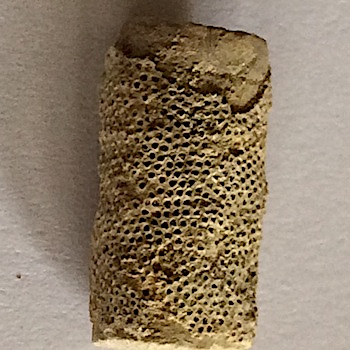 Crinoid with Bryozoa #300  Mineral Wells Formation  Mineral Wells, Palo Pinto Co.,TX