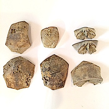 Crinoid Cup Parts #365  Mineral Wells Formation  Mineral Wells, Palo Pinto Co.,TX
