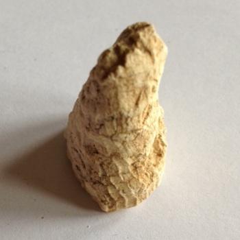 Rudist #10  Walnut Clay Formation  Hood Co., TX