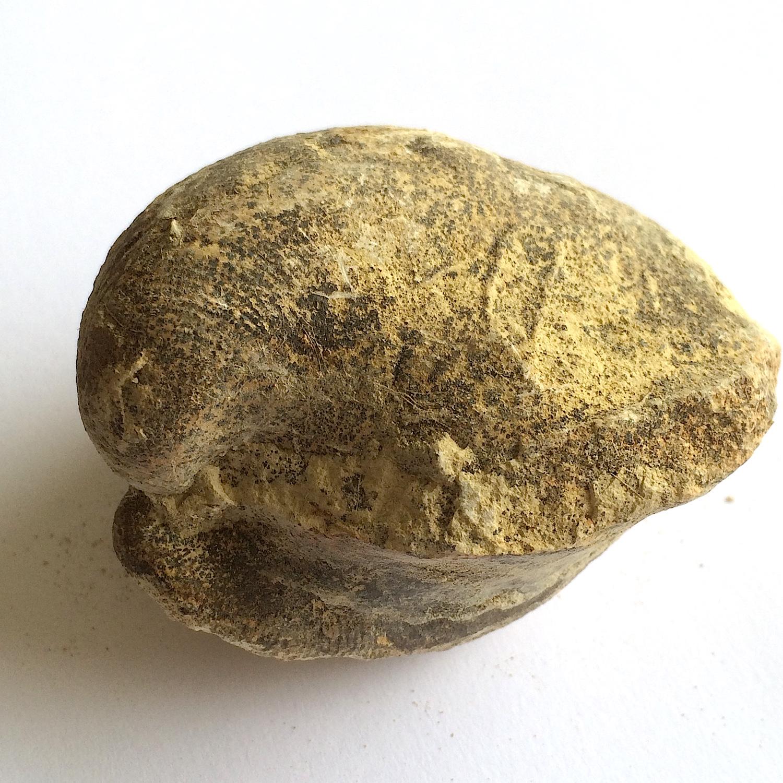 Anoma #656  Grayson Marl Formation  Denton Co., TX