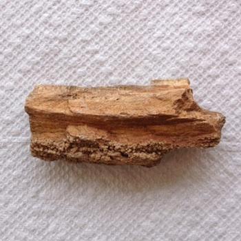 Petrified Wood  Paluxy Sand Formation  Hood Co., TX