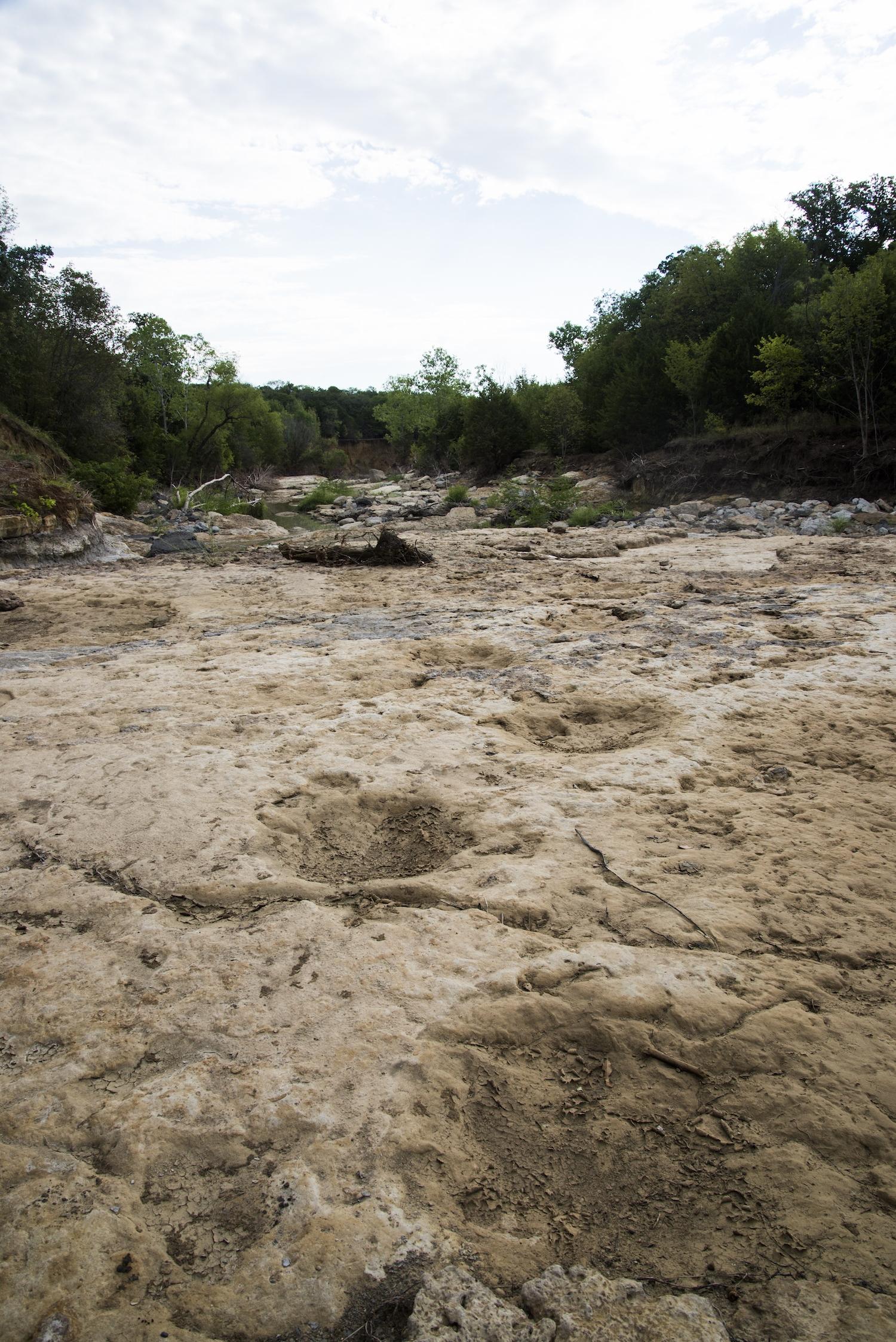 Dinosaur Trackway  Grapevine Lake  Grapevine, Tarrant Co., TX