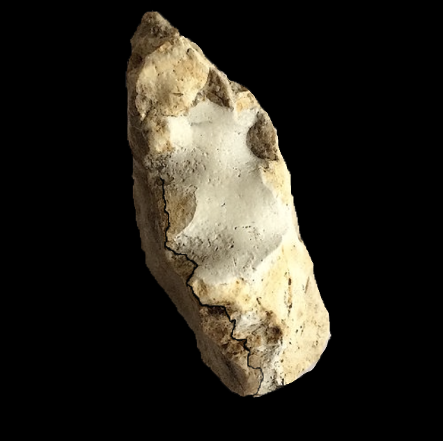 Metengonoceras #390b  Comanche Peak Formation  Hood Co., TX