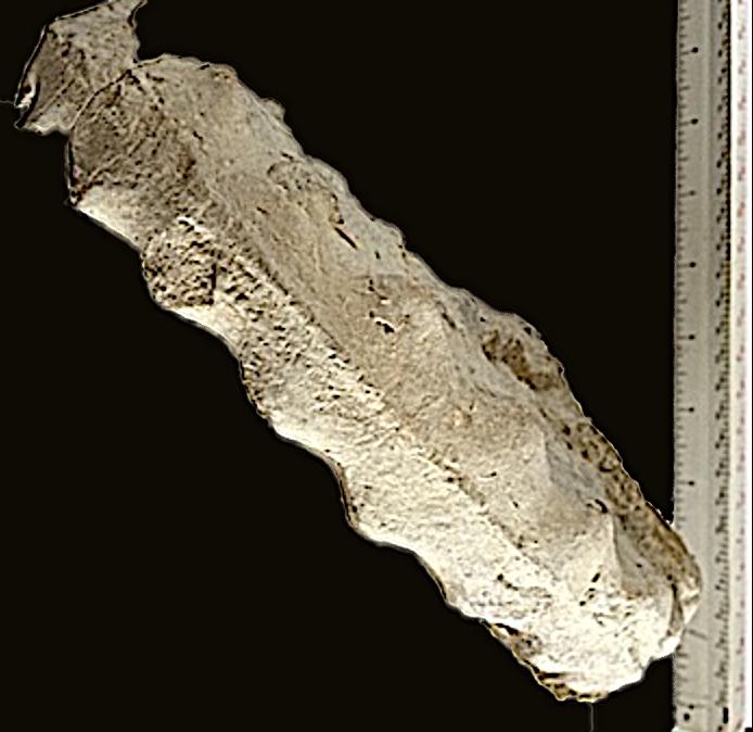 Mortoniceras #347 Top  Duck Creek Formation  Grayson Co., TX