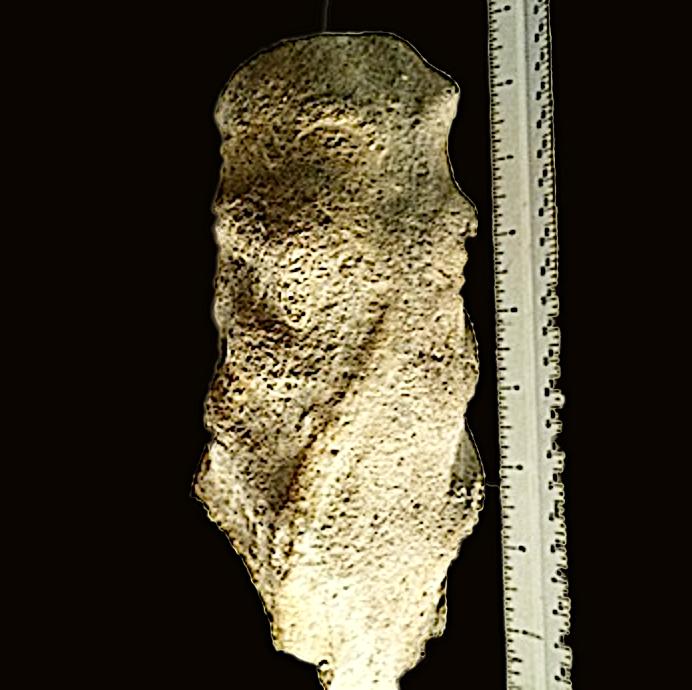Mortoniceras #358  Duck Creek Formation  Grayson Co., TX