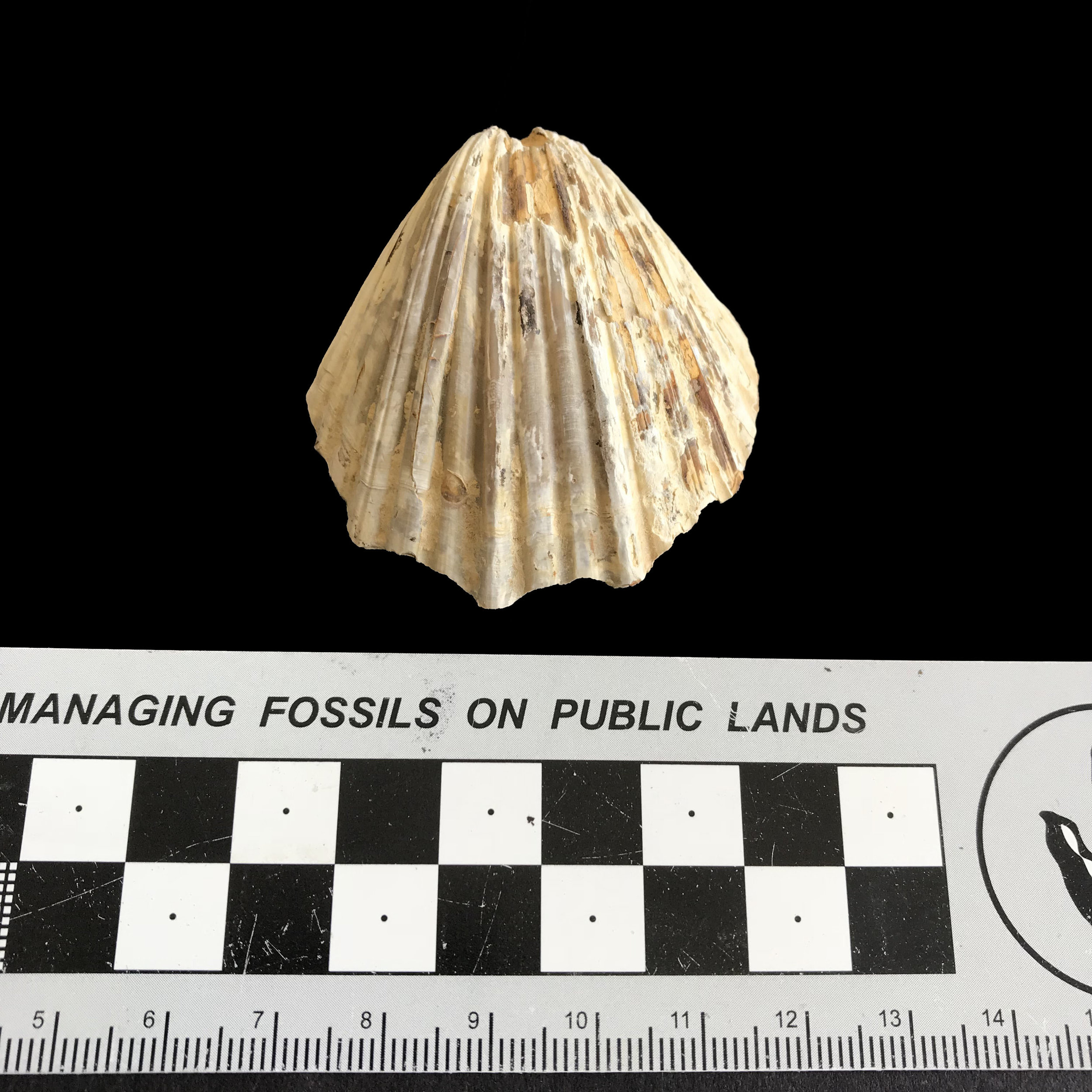 Neithia #1132  Grayson Marl Formation  Denton Co., TX