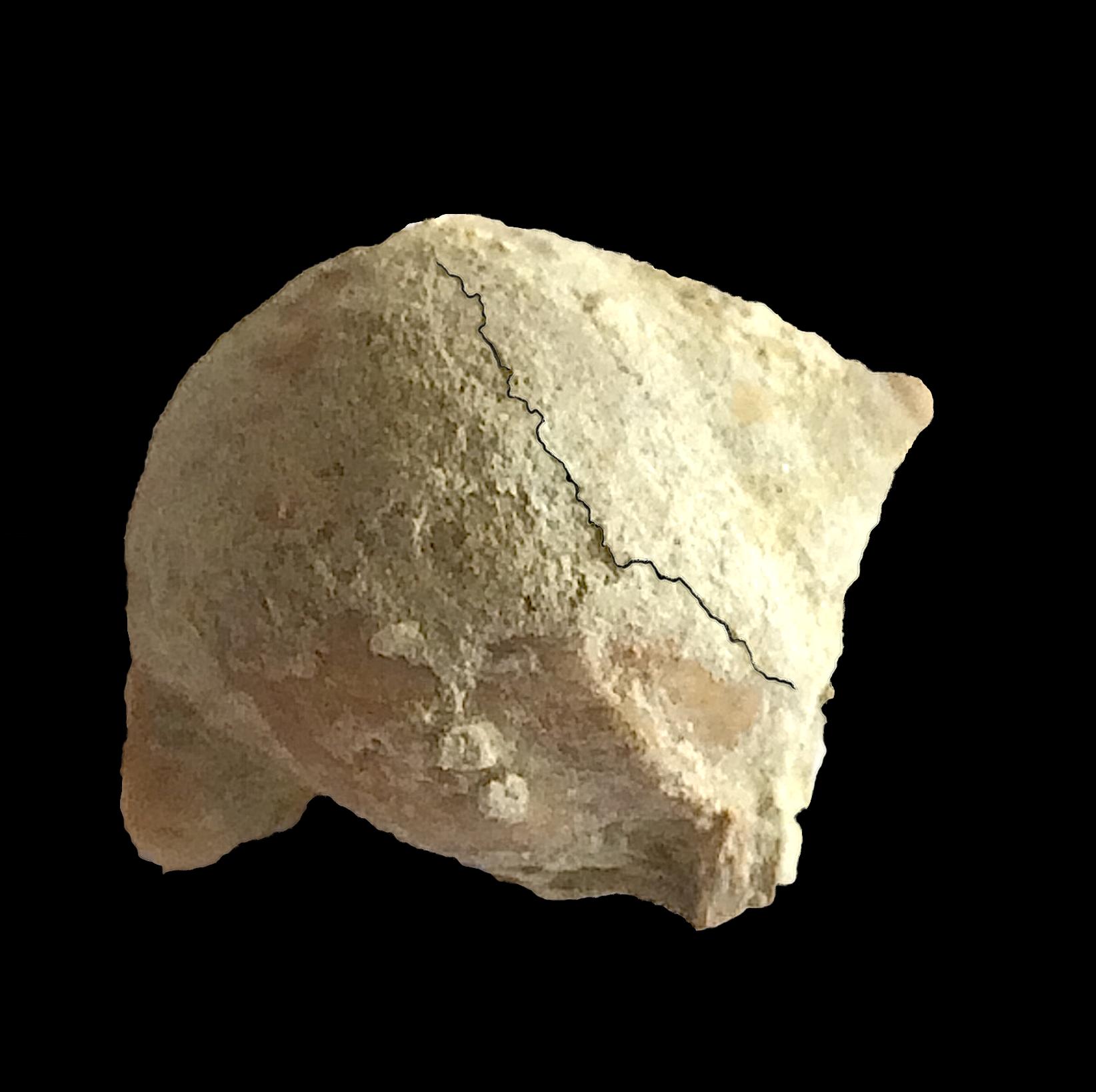 Strobeus brevis #465b  Graham Formation (Finis Shale)  Jacksboro, Jack Co., TX