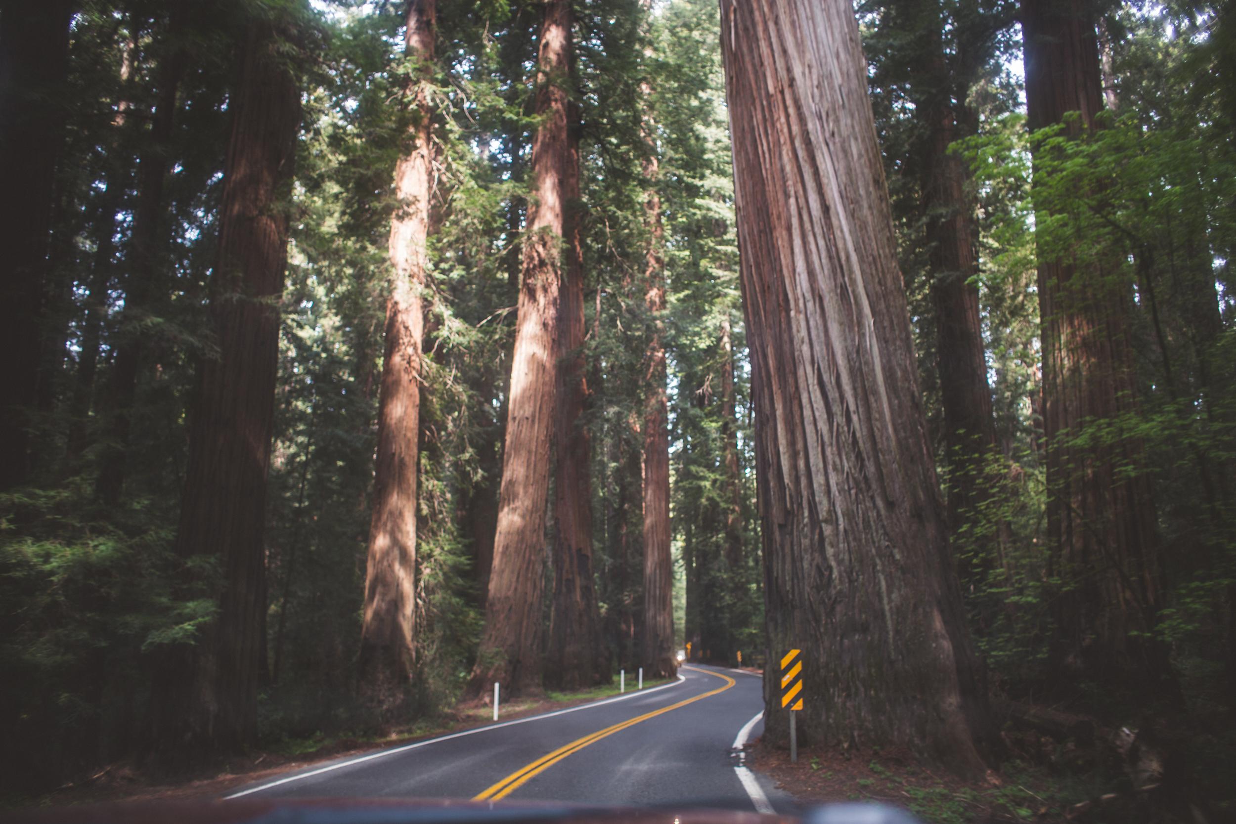 Redwoods-2.jpg