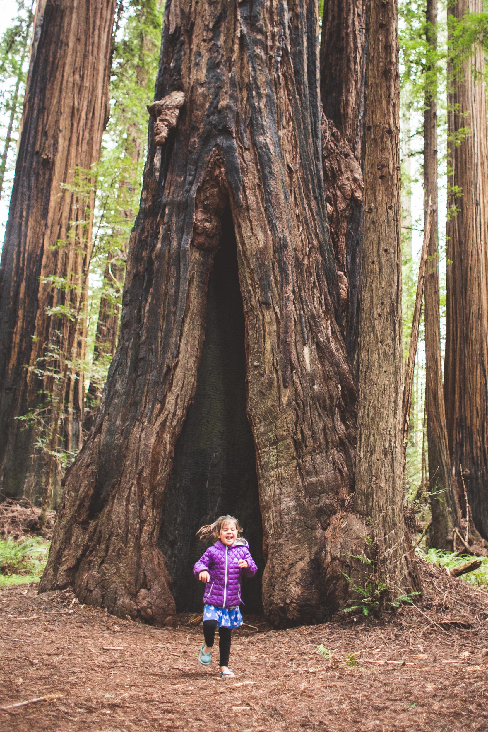 Redwoods-15.jpg