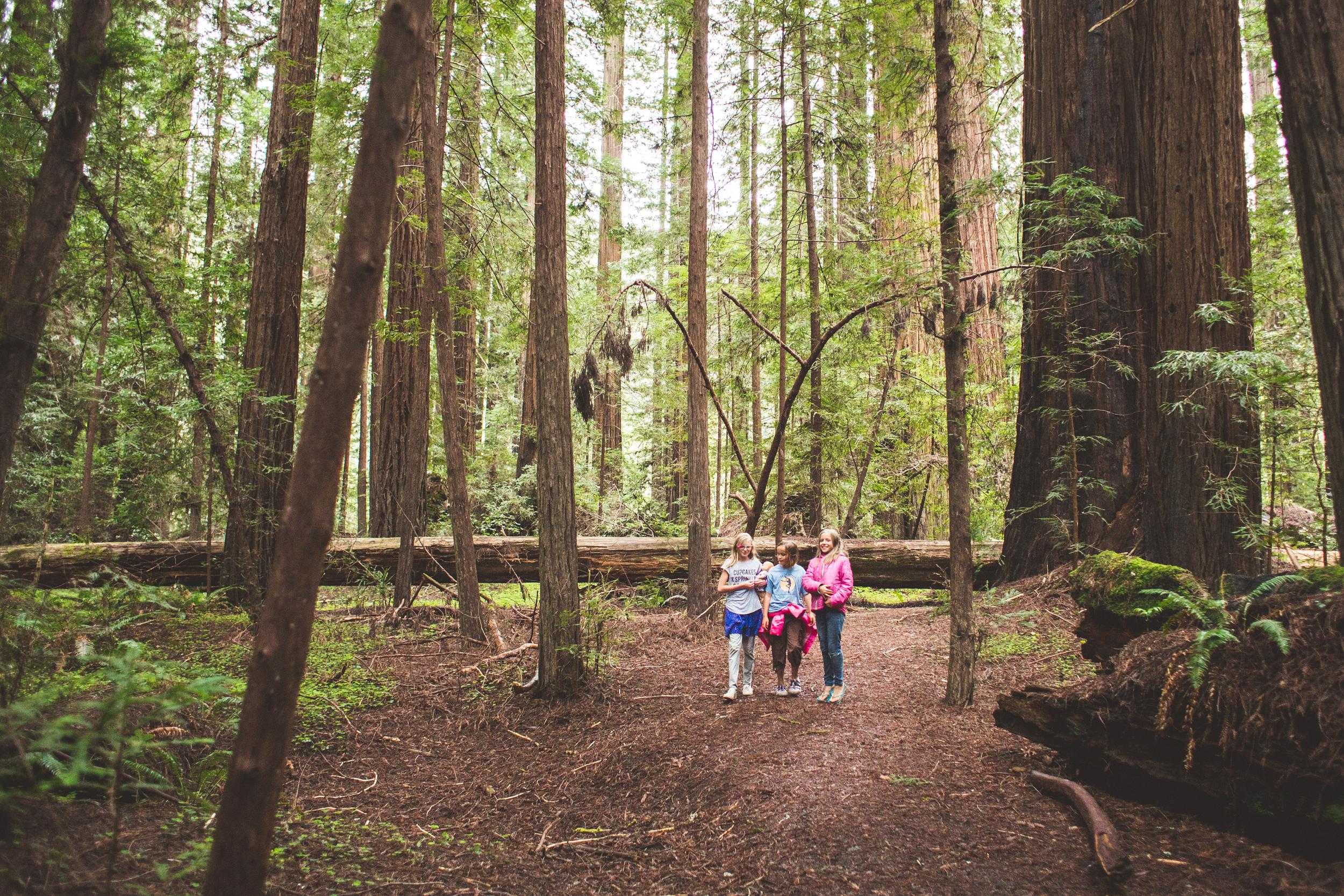 Redwoods-18.jpg