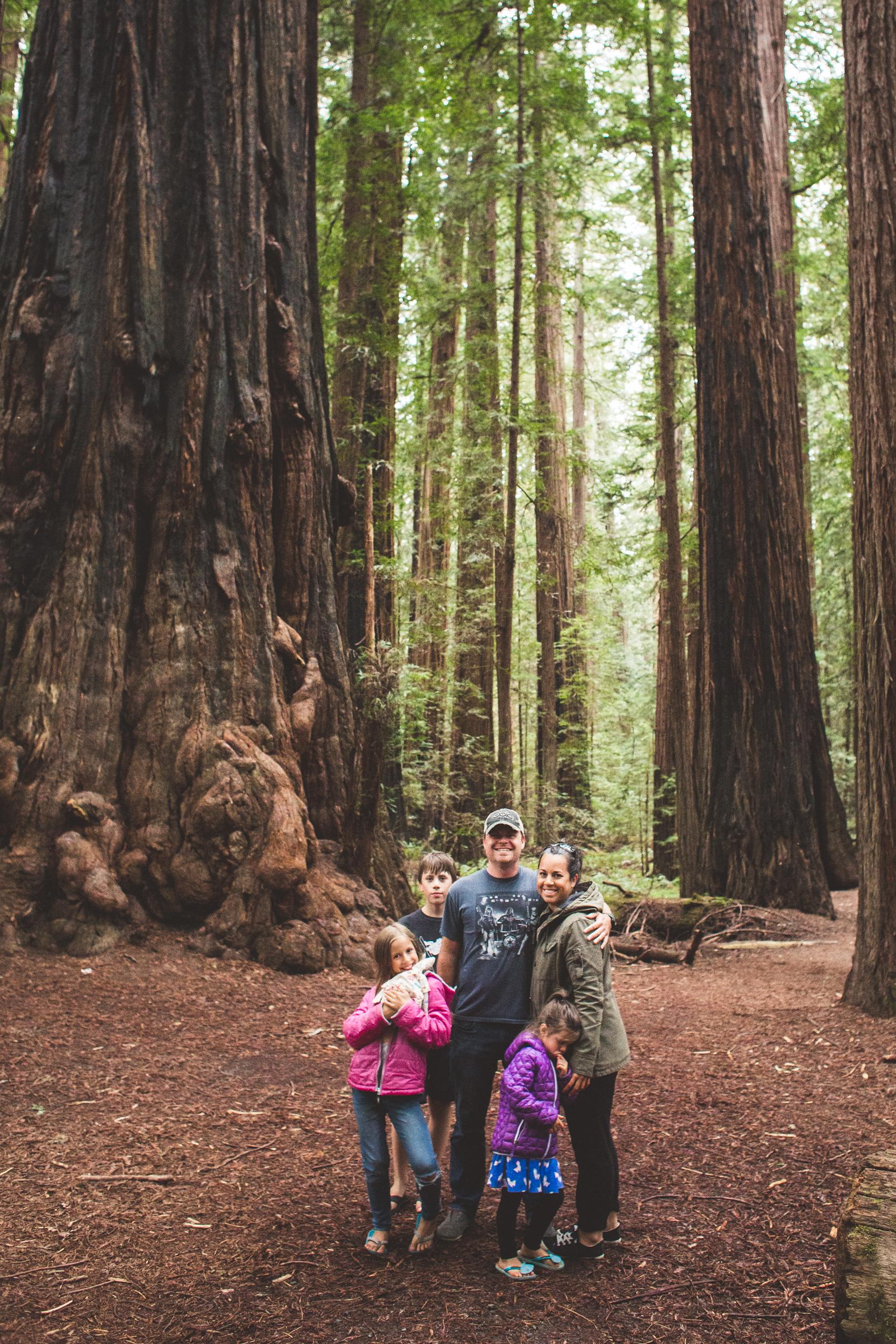 Redwoods-28.jpg