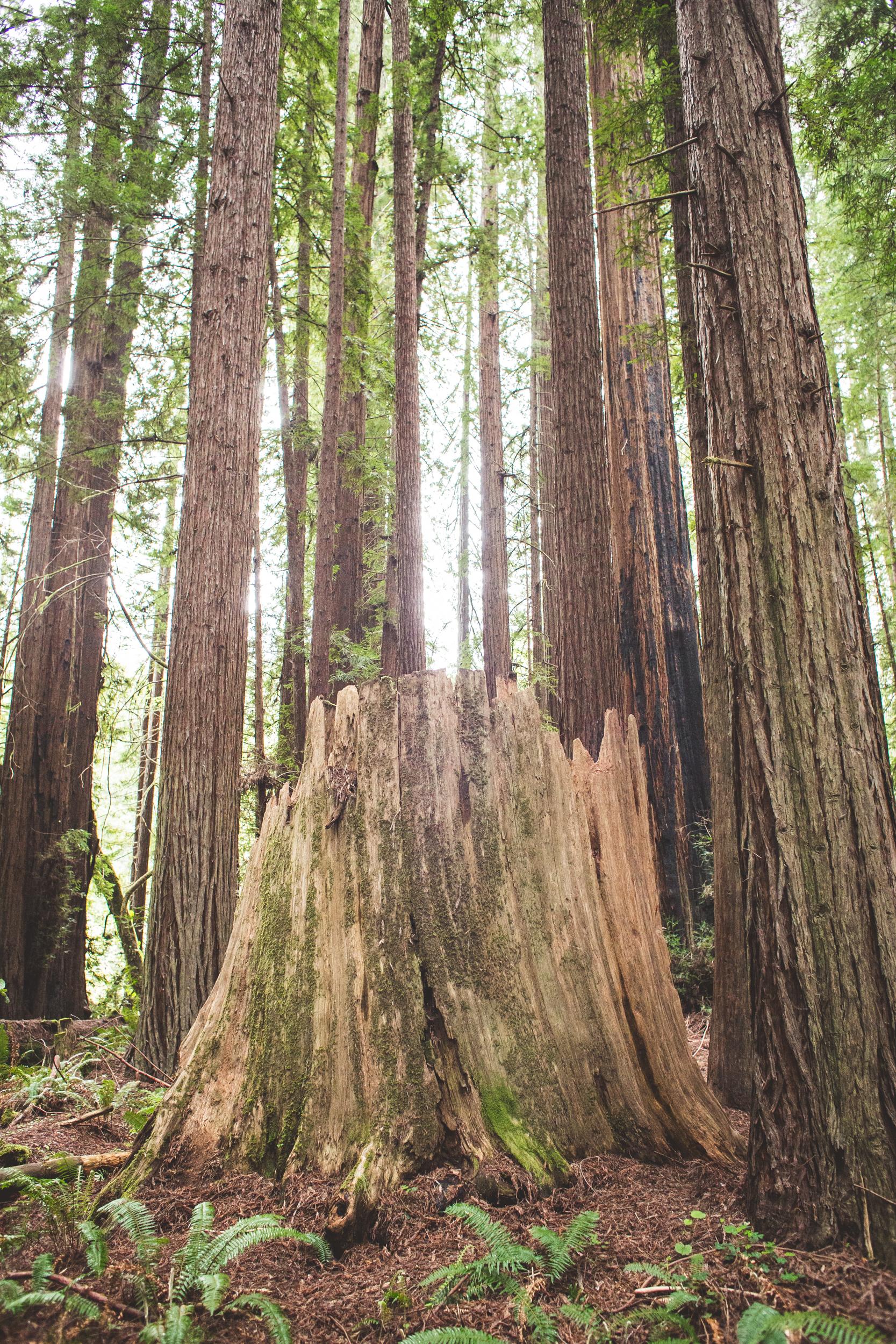 Redwoods-29.jpg