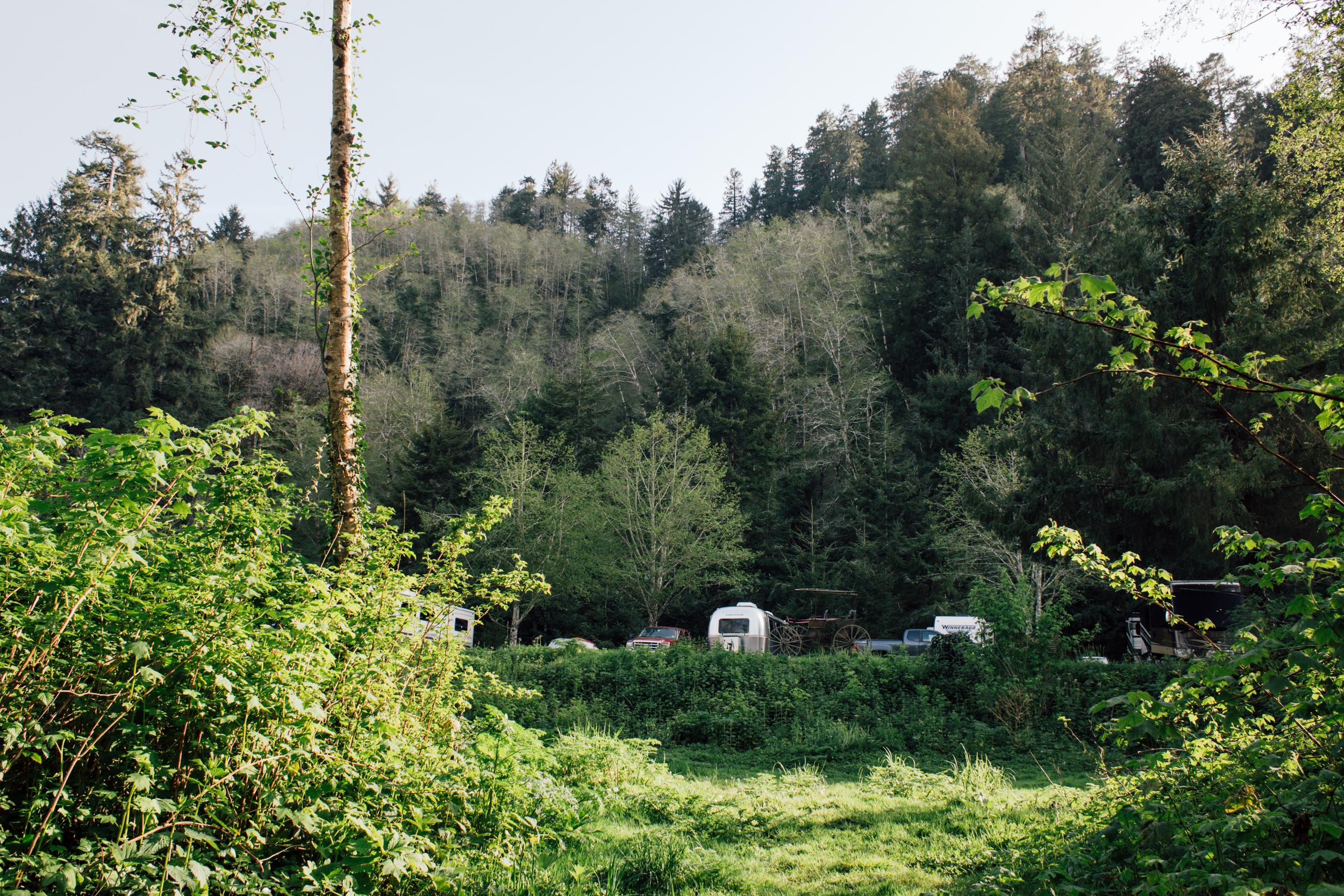Redwoods-119.jpg