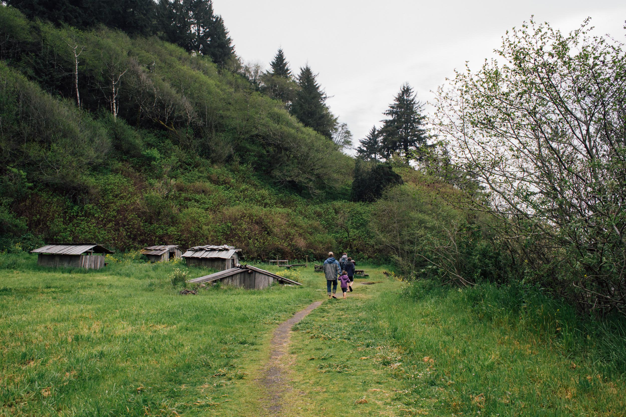 Redwoods-68.jpg