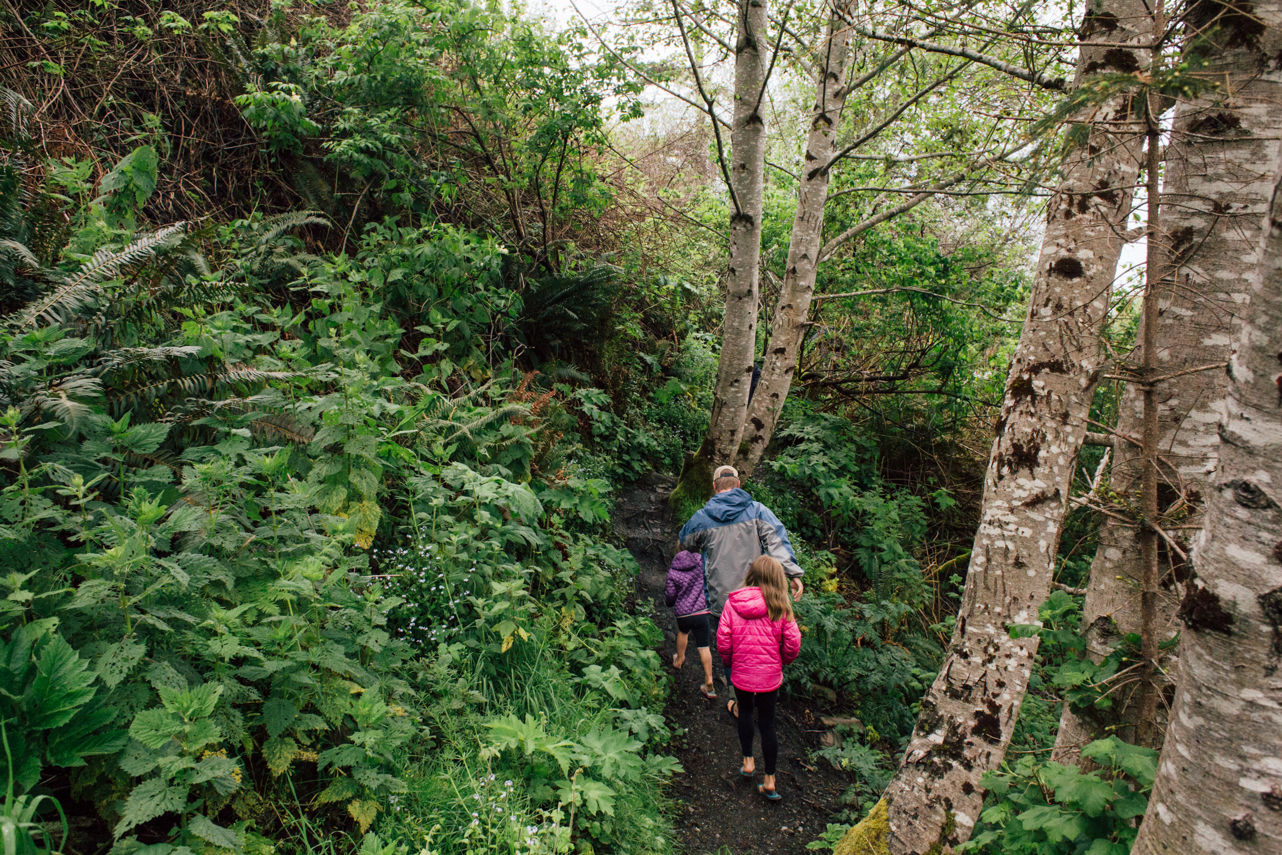 Redwoods-69.jpg