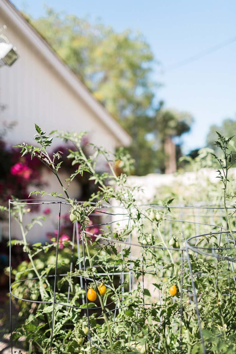 OutdoorHaven-Phoenix-AZ-Arizona-outdoor-photoshoot-location-natural-light-photography-studio-lifestyle-photo-ideas-indoor-photoshoot-location-10.jpg
